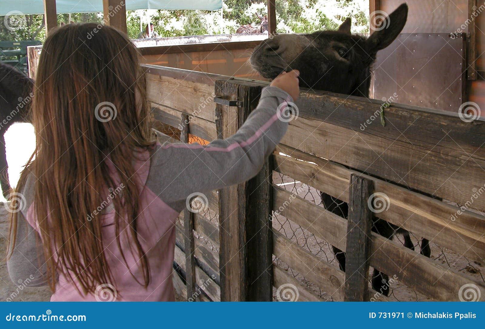 Alimenter l âne avec des raccords en caoutchouc