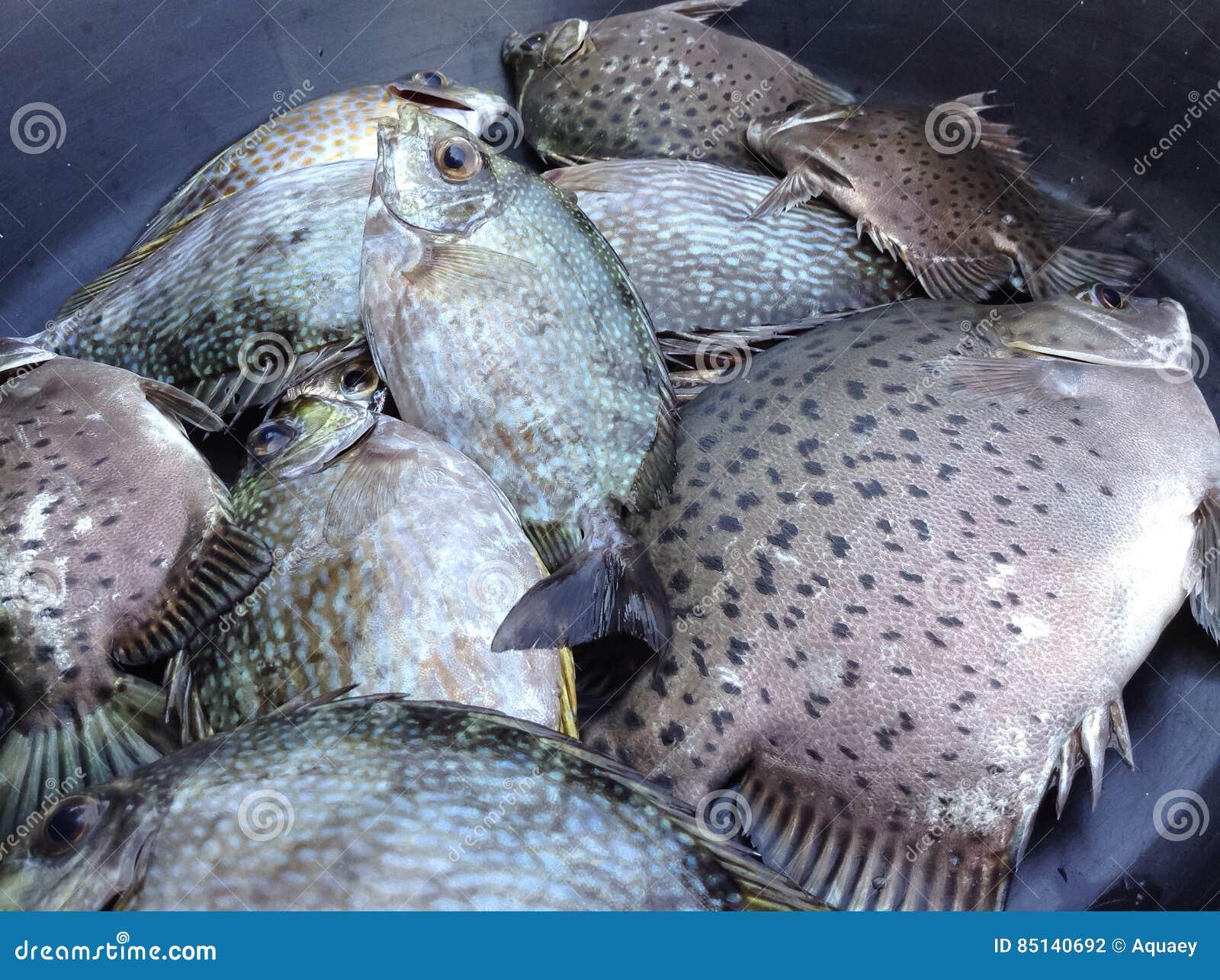 Alimento de peixes preparado