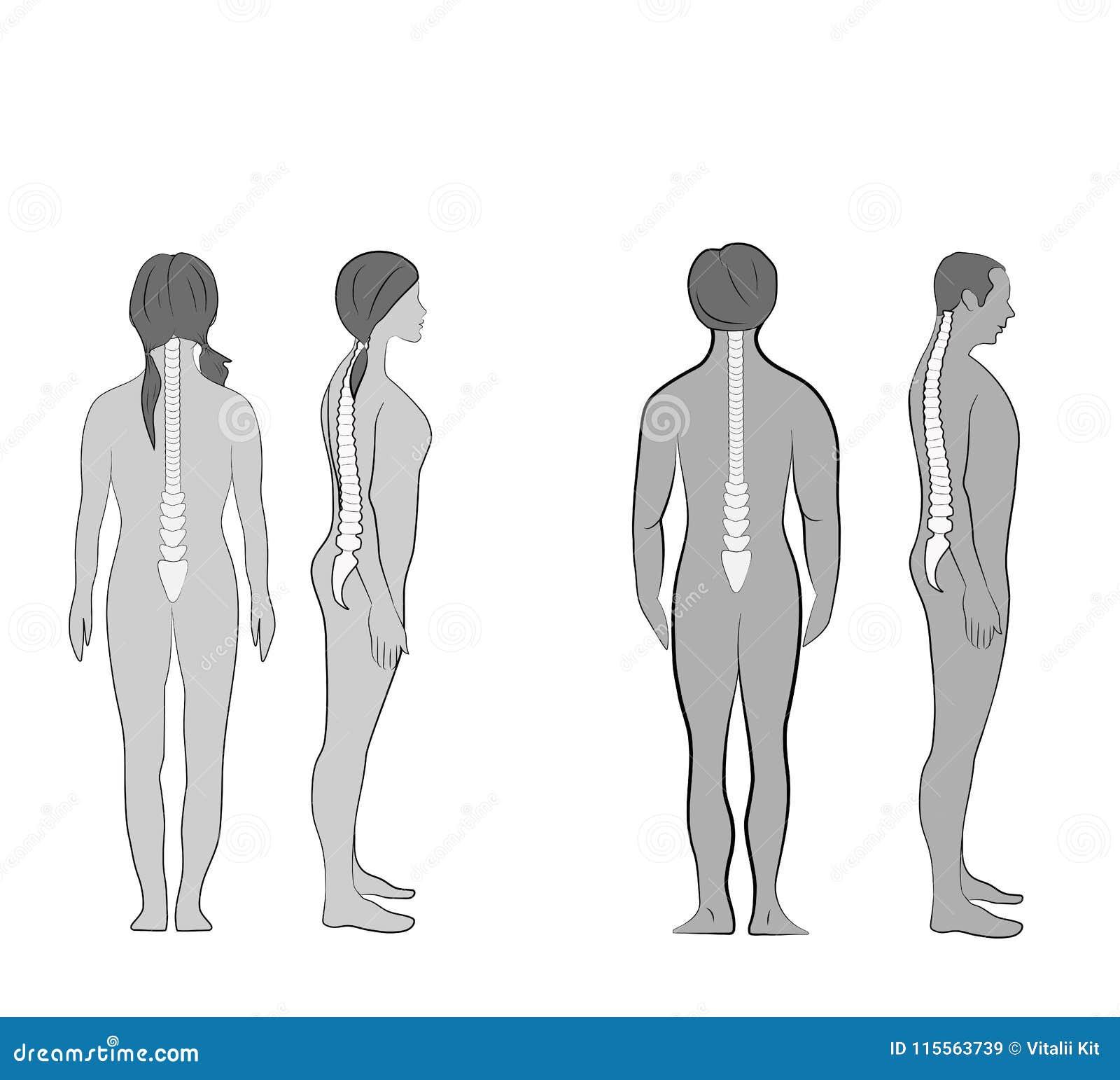 Alineación del cuerpo humano en la postura derecha para la buena personalidad y sano correctos de espina dorsal y del hueso Atenc