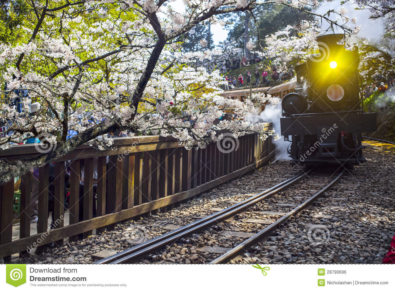 Alishan Forest Train Royalty Free Stock Image - Image: 28790696