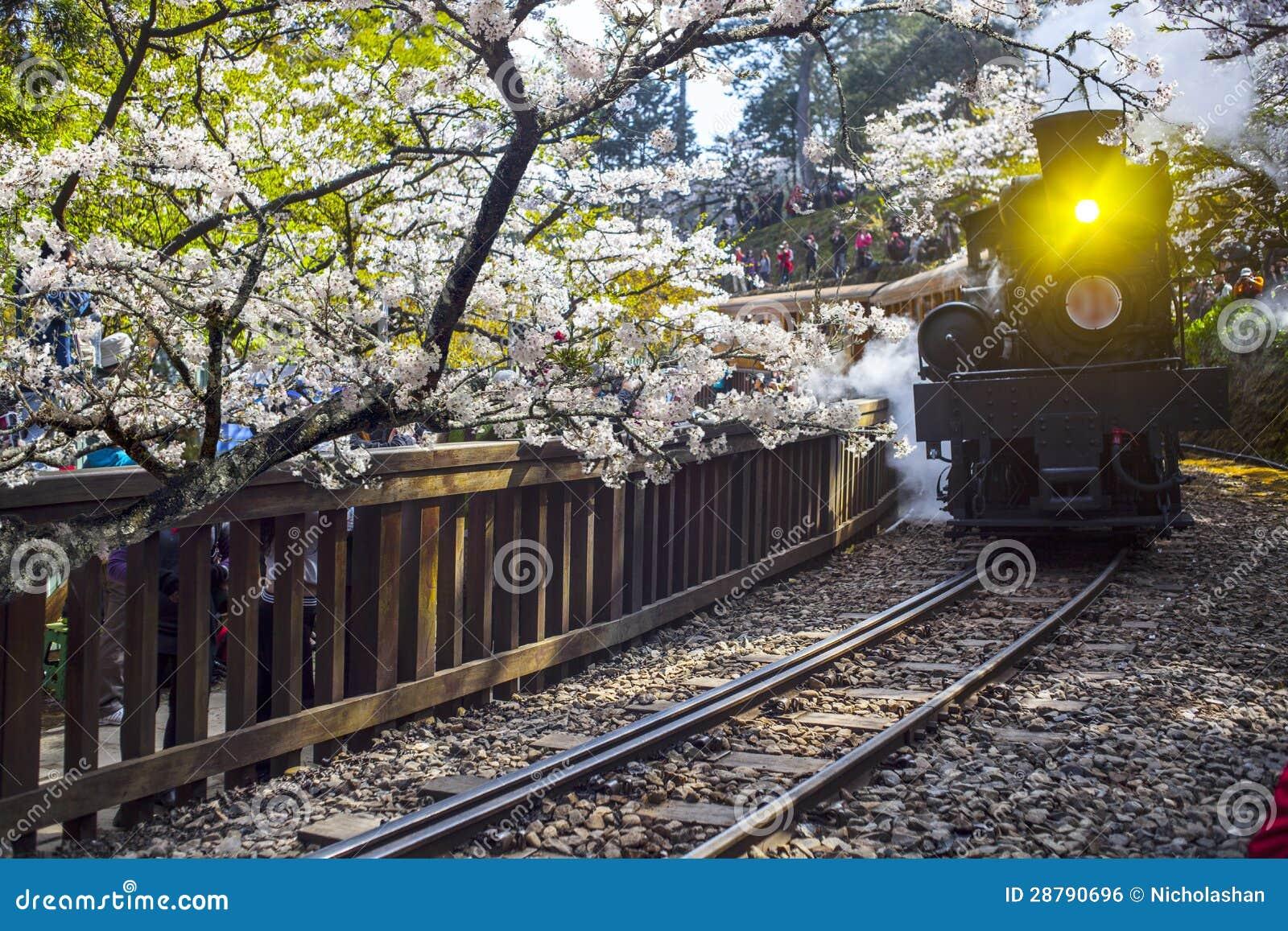 Alishan Forest Train Royalty Free Stock Image - Image: 28790696