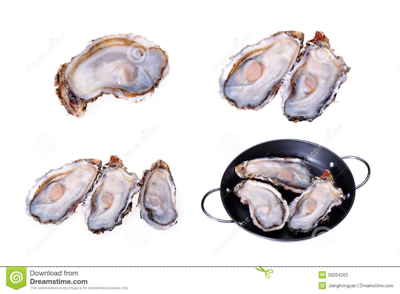Alive Oysters Stock Photography - Image: 28264262