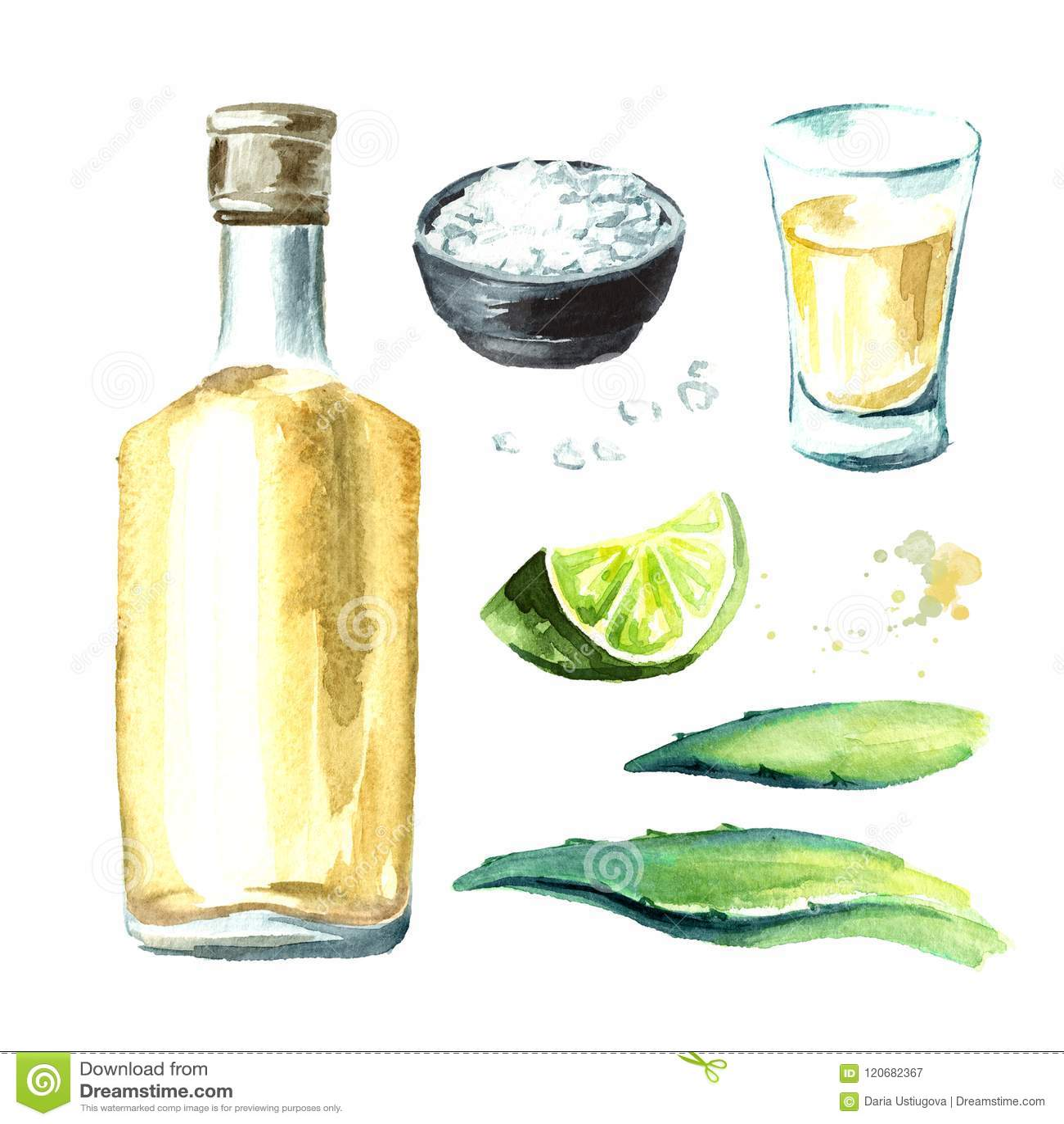Alkoholgetränk Tequilasatz, gelbe Flasche mexikanische Kaktusschnäpse, volles Schnapsglas mit Scheibe des Kalkes und Salz, Agaven