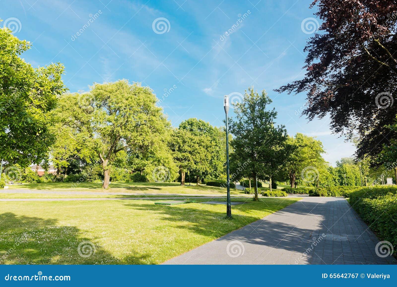 Allée d arbres de parc