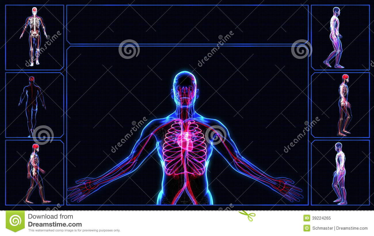 All Human Body Systems Stock Video Illustration Of Blood 39224265