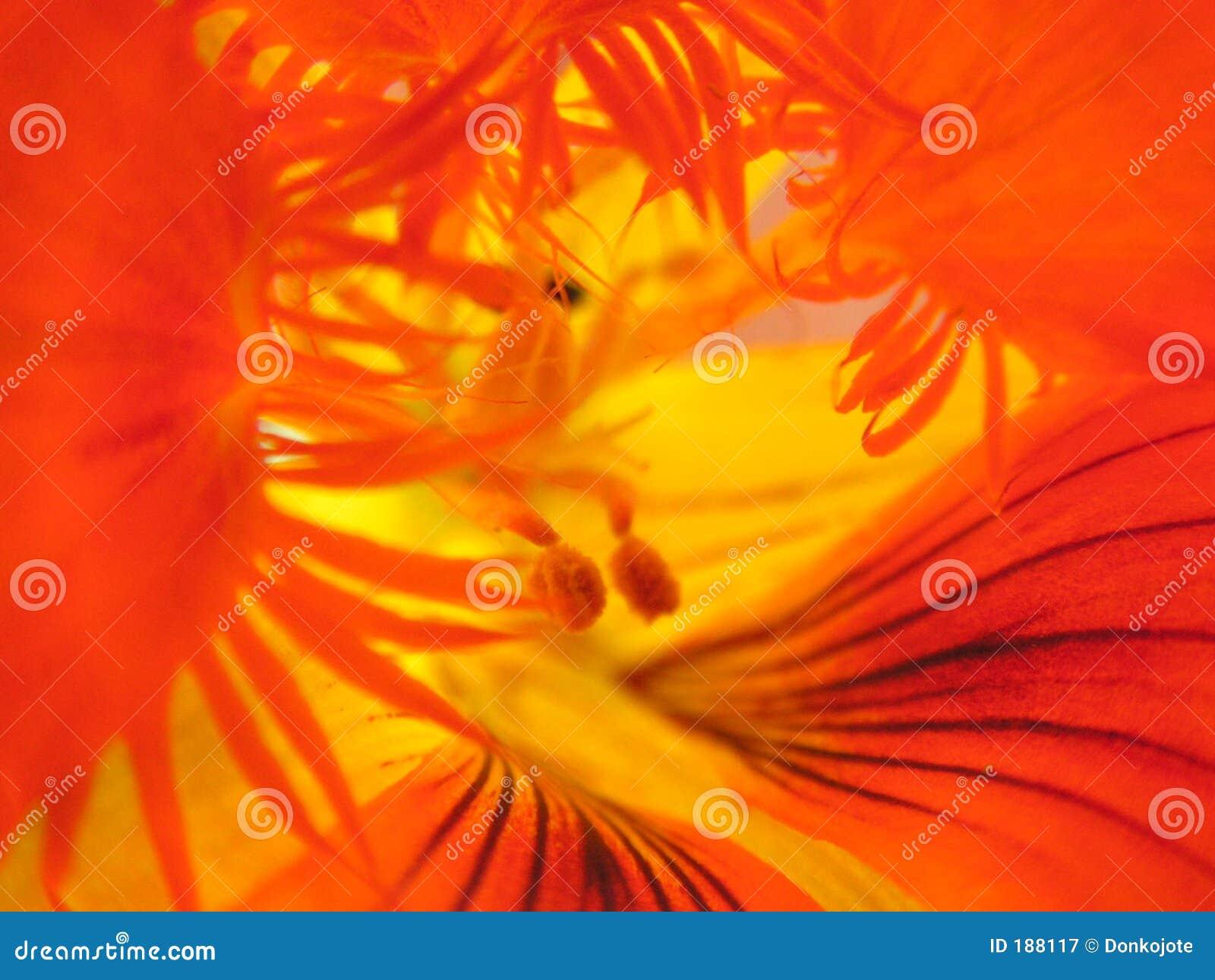 All interno del fiore