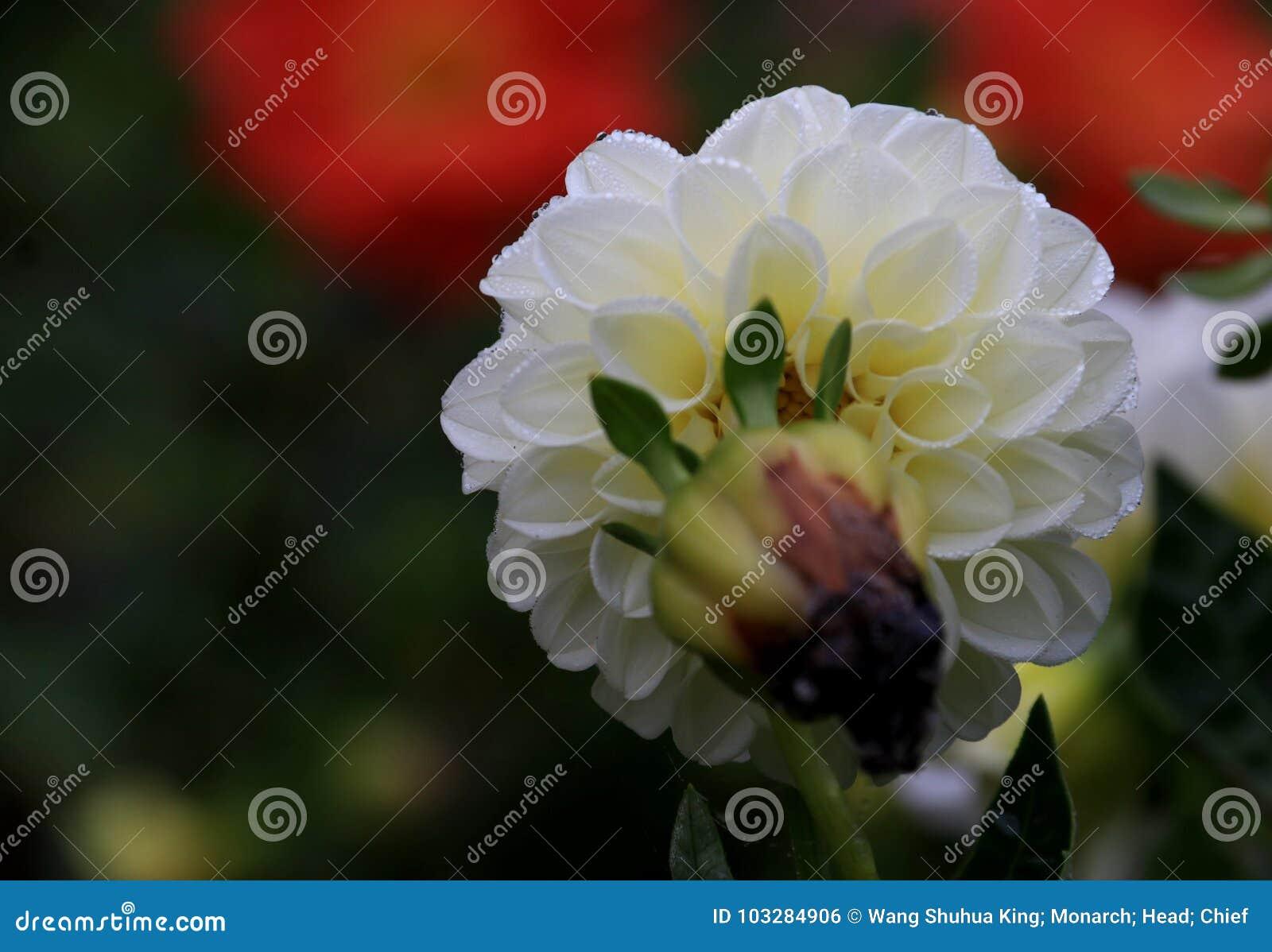 Flower Stock Photo Image Of Familynn Aquatic Daughter 103284906