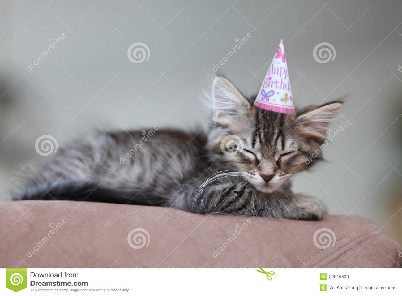 Cute Tired Kitten Wearing A Birthday Party Hat Taking Nap After Little Girls