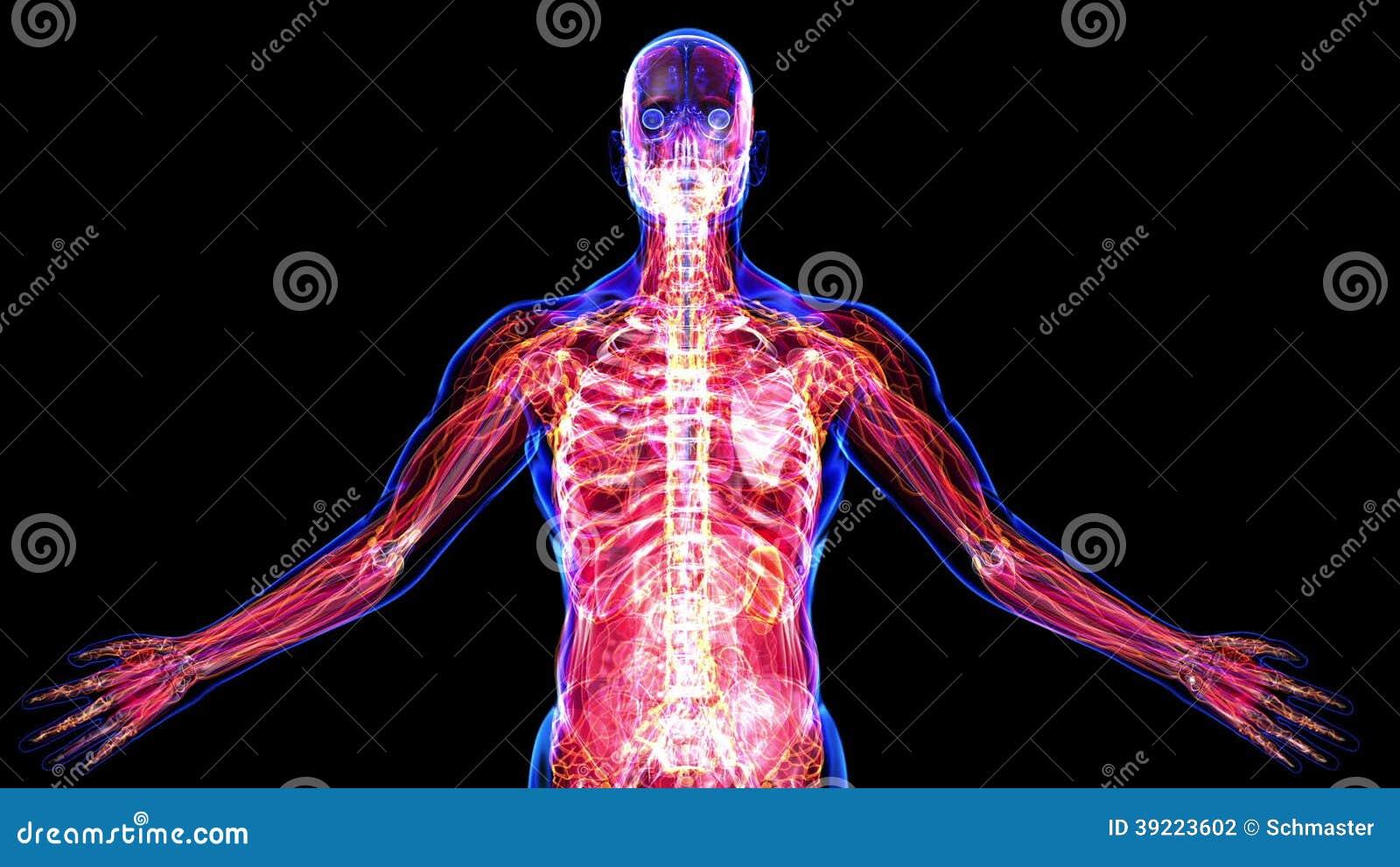 Alle Systeme Des Menschlichen Körpers Stock Footage - Video von ...