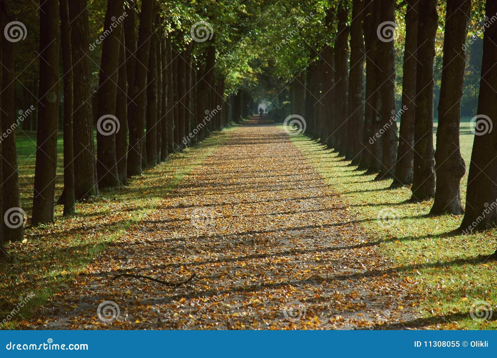 Allee in einem Park im Herbst