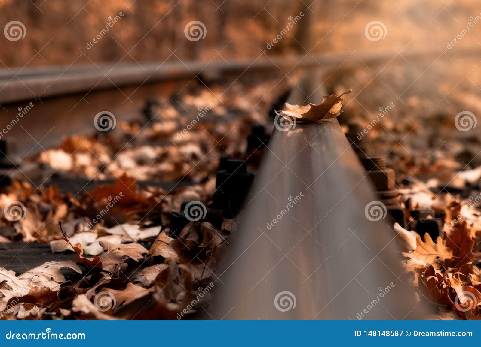 Alleen op de sporen