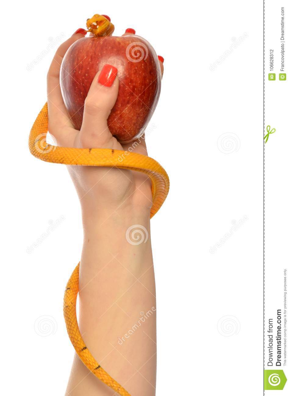 Allegory Of The Temptation Of Adam And Eve Stock Photo Image Of