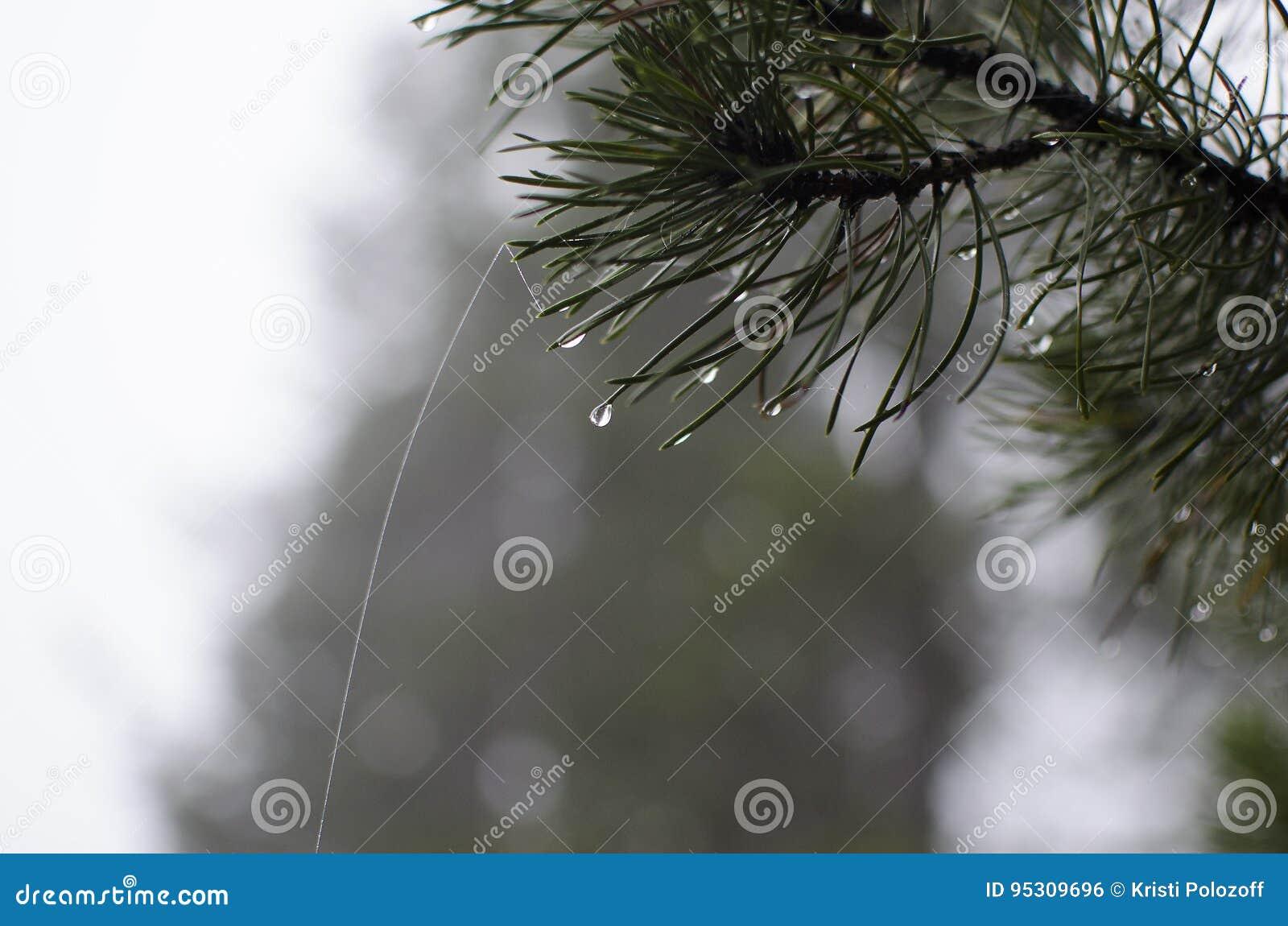 Allenspark Trailhead