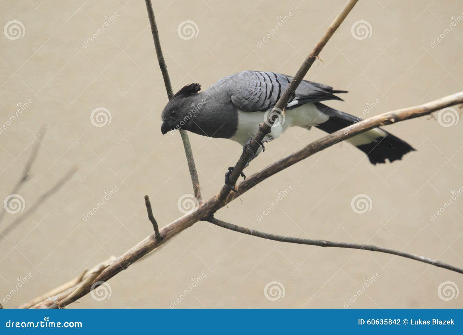 Aller-loin-oiseau Blanc-gonflé