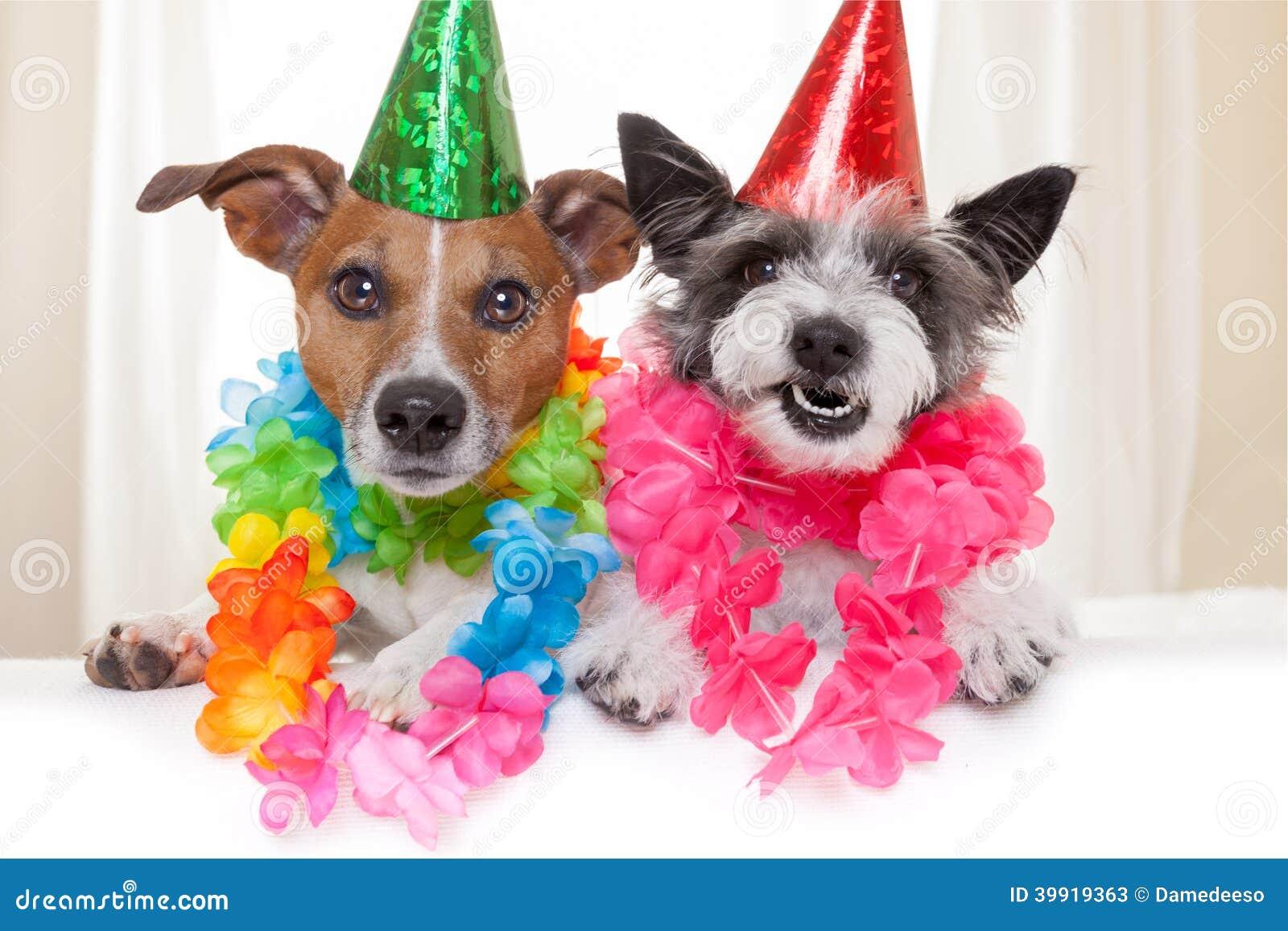 Alles Gute Zum Geburtstaghunde Stockbild Bild Von Stimmung Hund