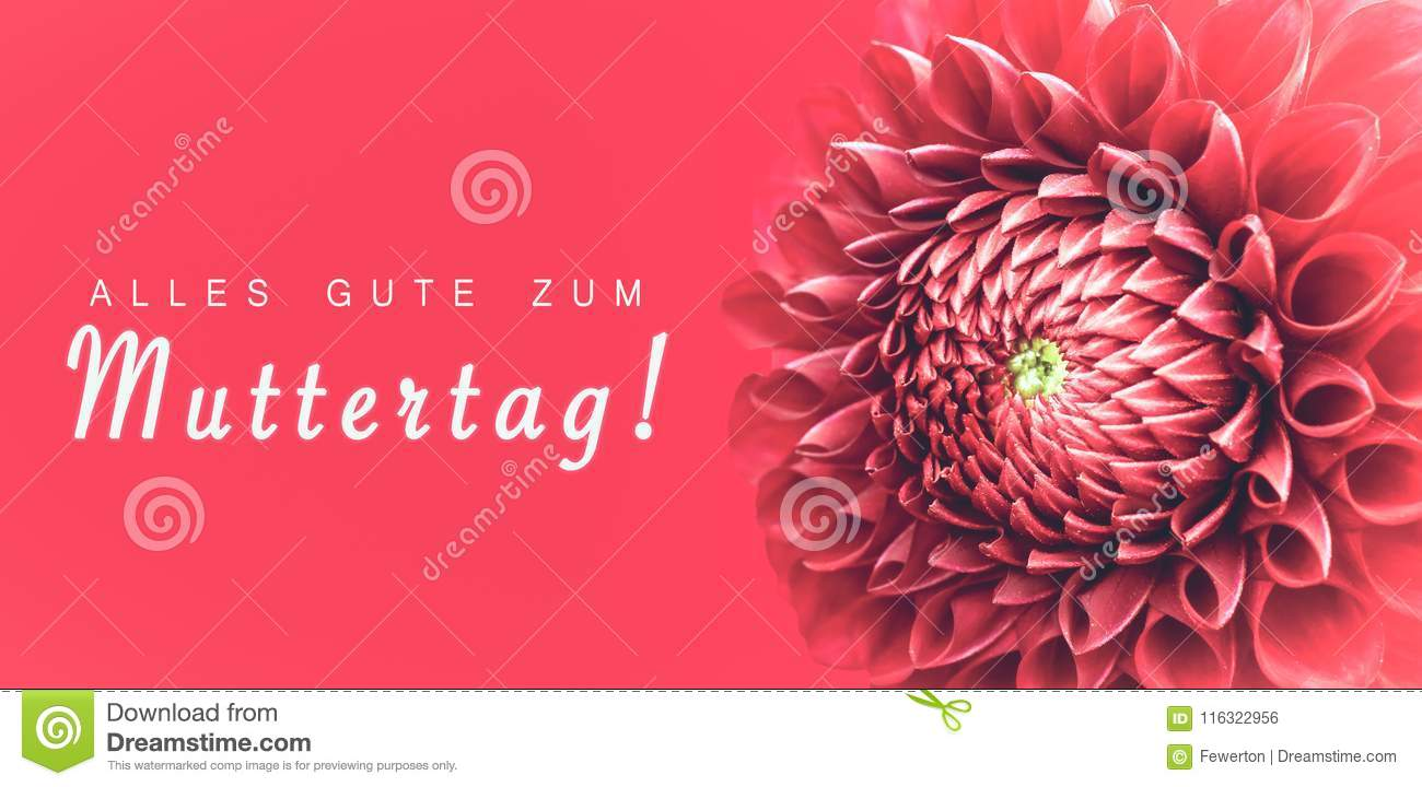 Alles Gute zum Muttertag! text in German: Happy Mothers`s Day! and pink dahlia flower details macro photo.