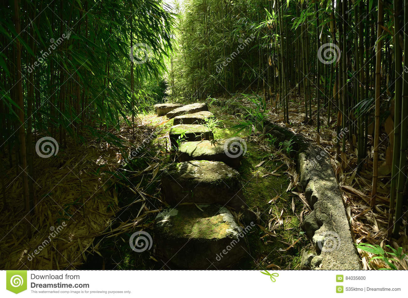 An alley through the bamboo grove of Kyoto Japan