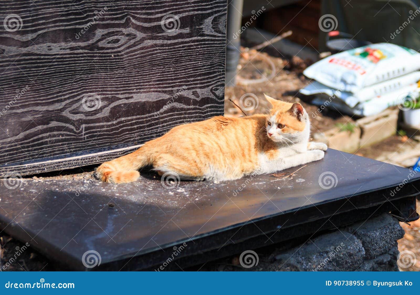 alley cat in shantytown