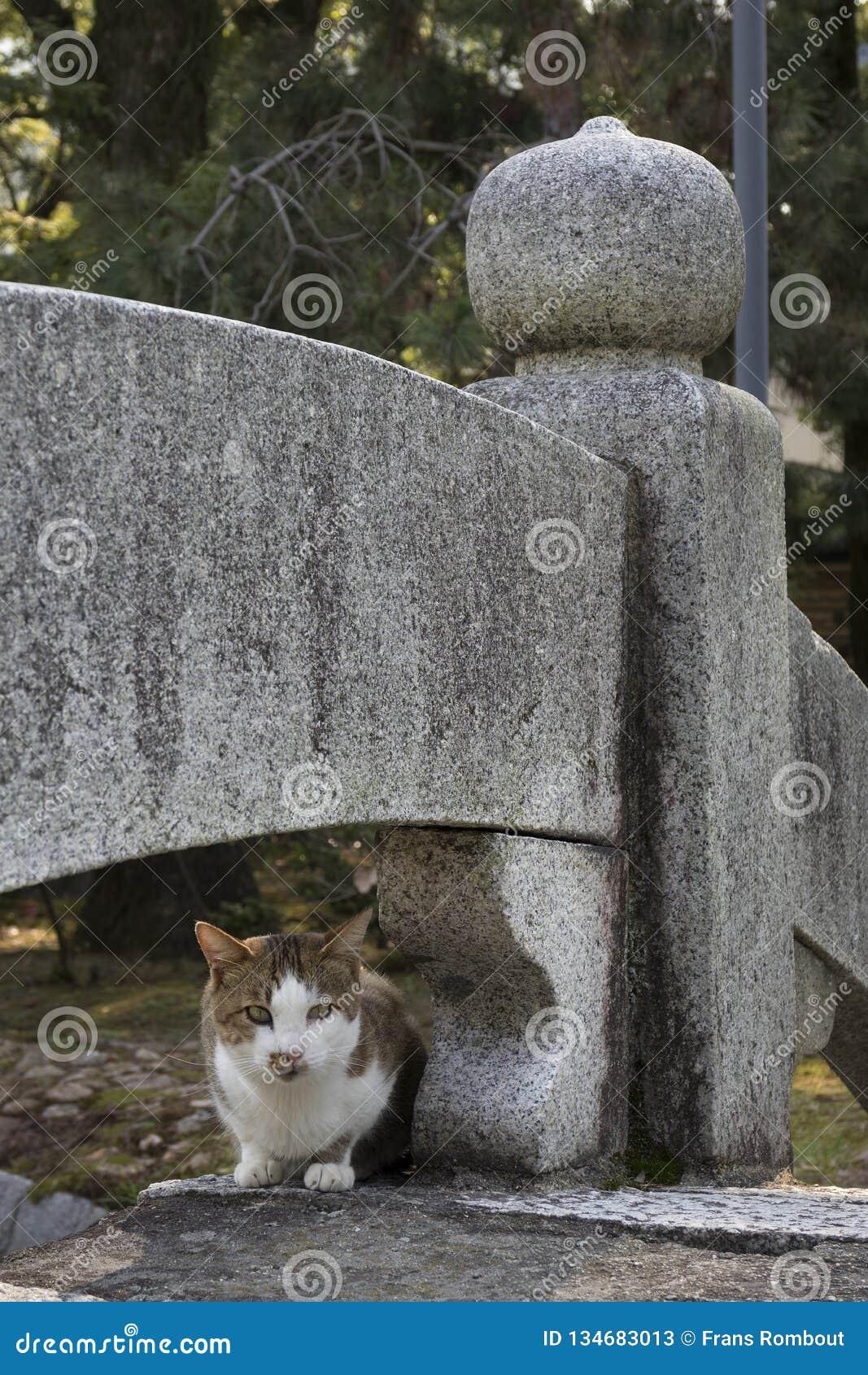 Alley cat sitting on a bridge