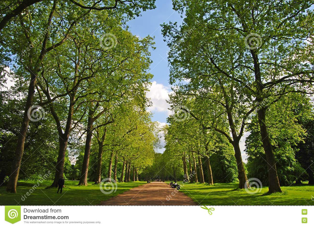 Alley in kensington gardens in london editorial photo for Garden trees london