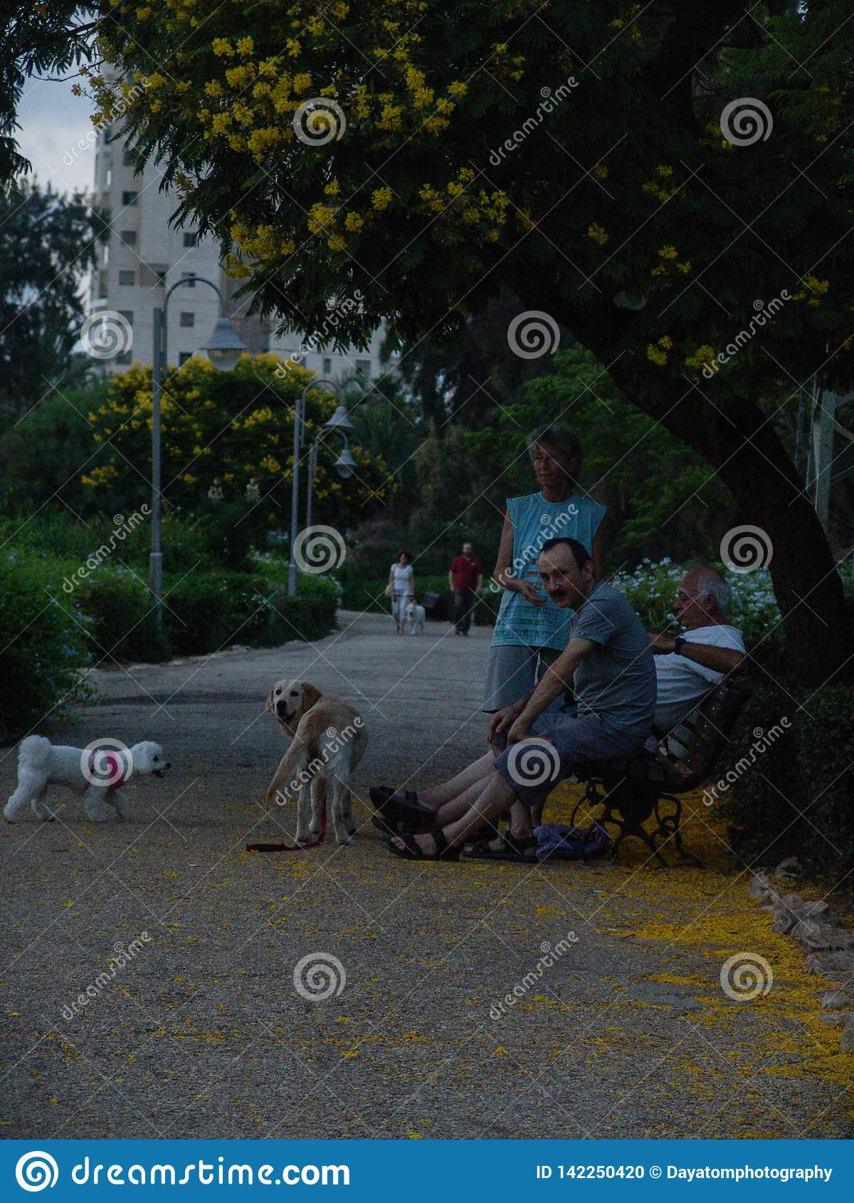 Alley park with yellow flowers blooming trees on the side, three people sitting on a bench and two dogs