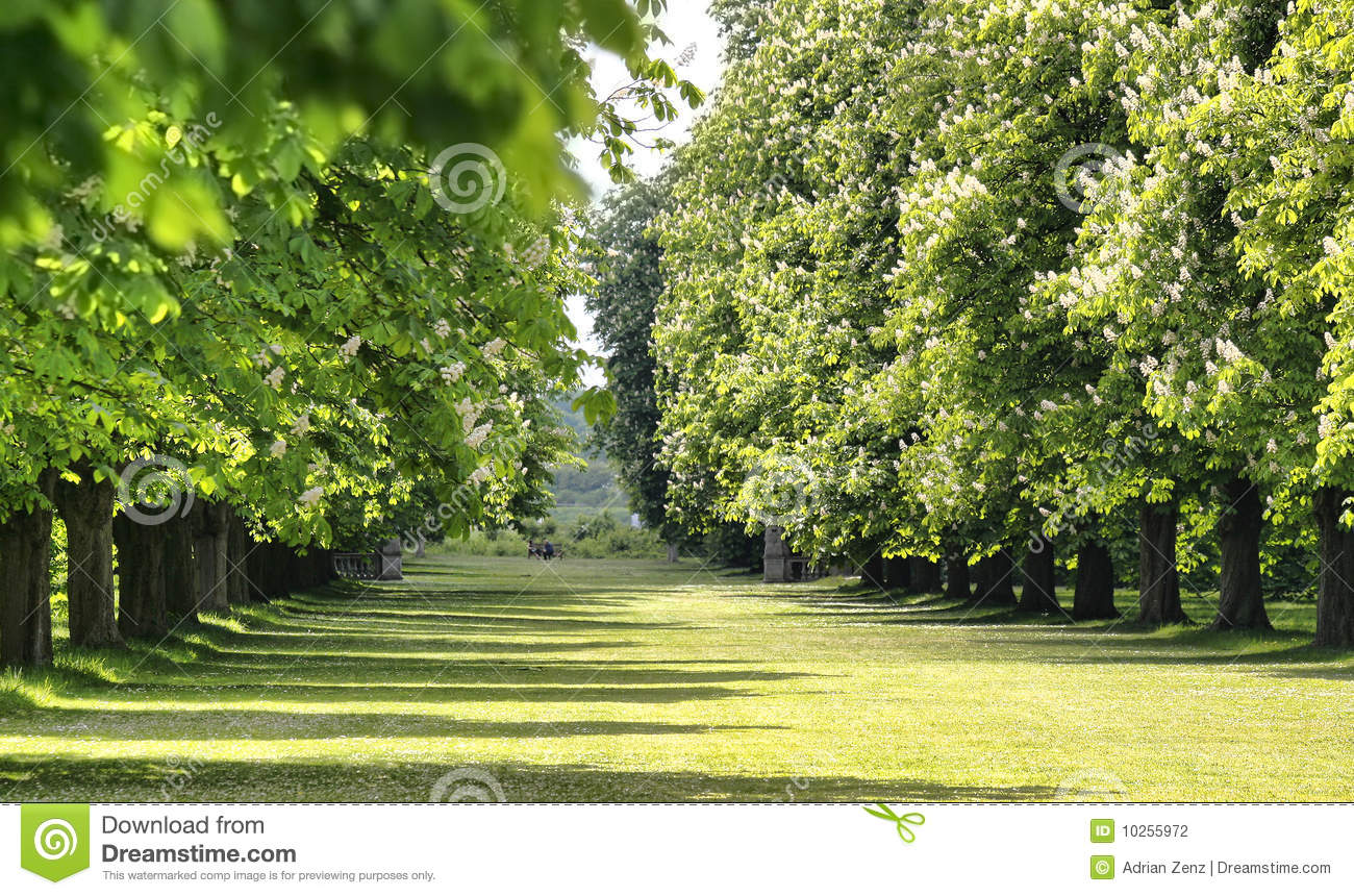 Alley of trees in an english garden stock photo image for Garden law trees