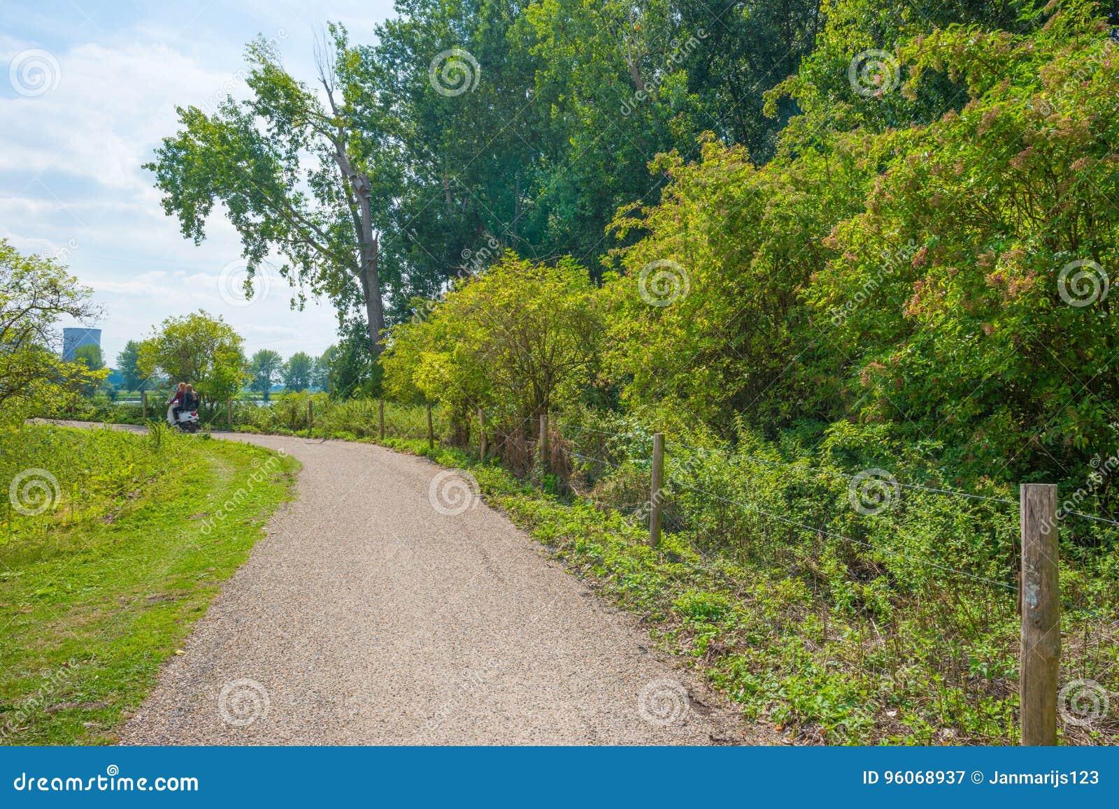 Allez à vélo le chemin par un champ rayé par arbre en été