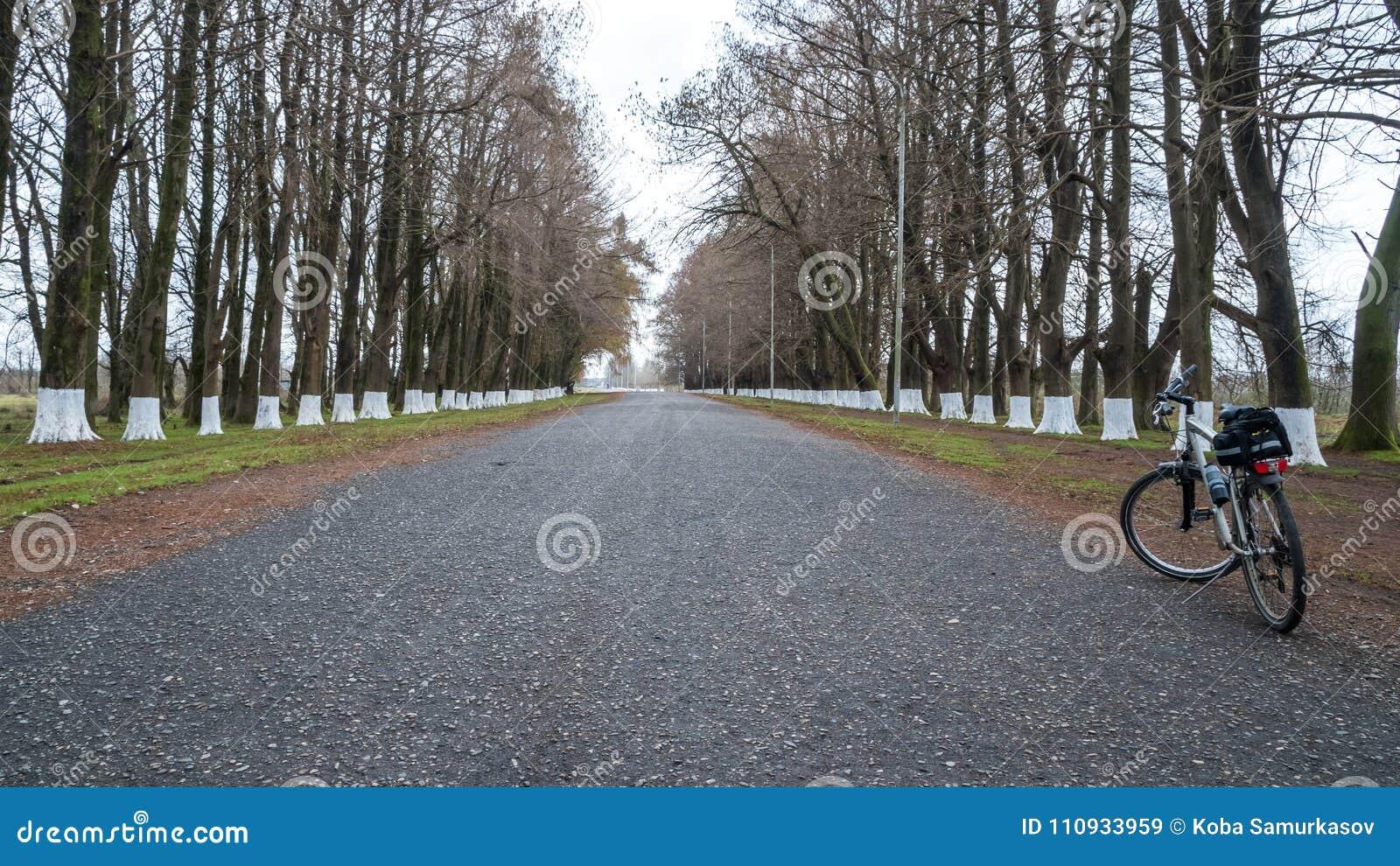 Allez à vélo sur la route parmi les arbres, Poti, la Géorgie