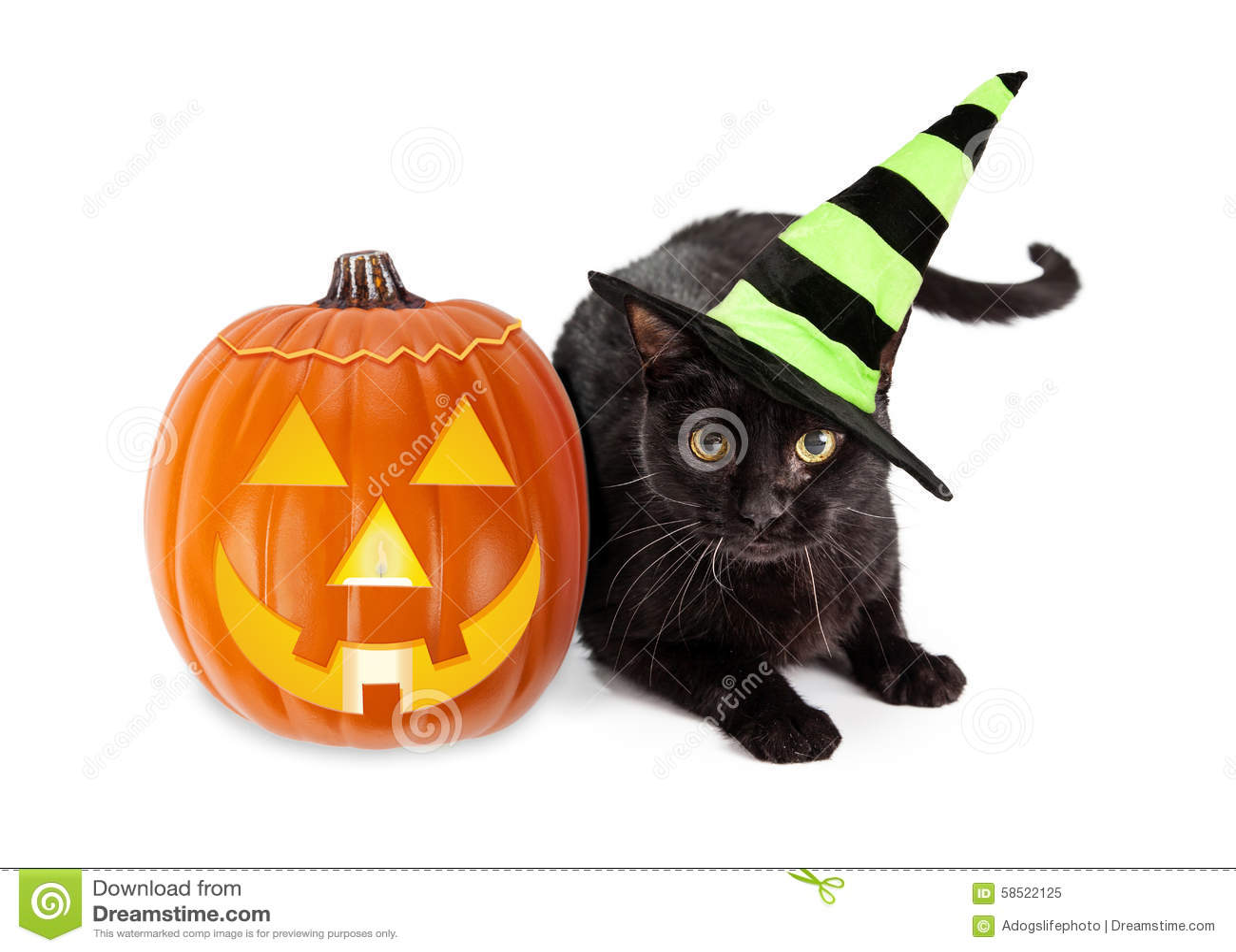 Allhelgonaafton svarta Cat Witch With Pumpkin