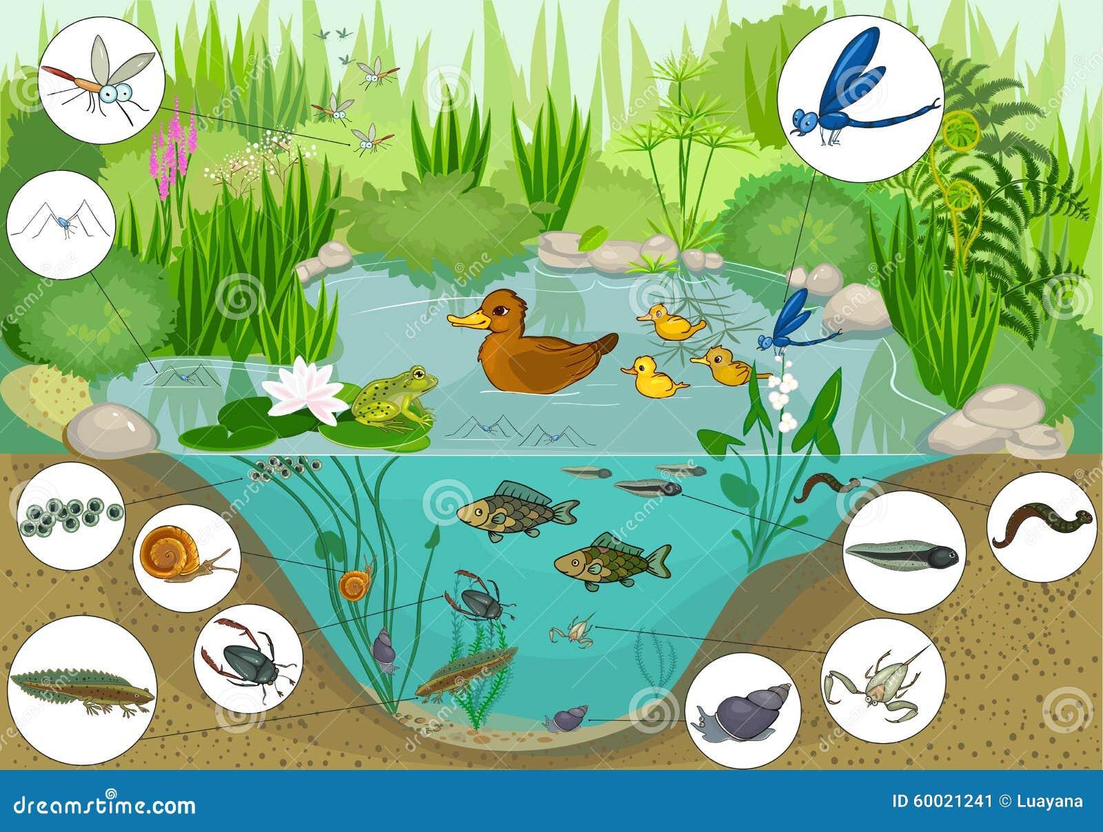 Allo stagno illustrazione vettoriale illustrazione di for Gli animali dello stagno