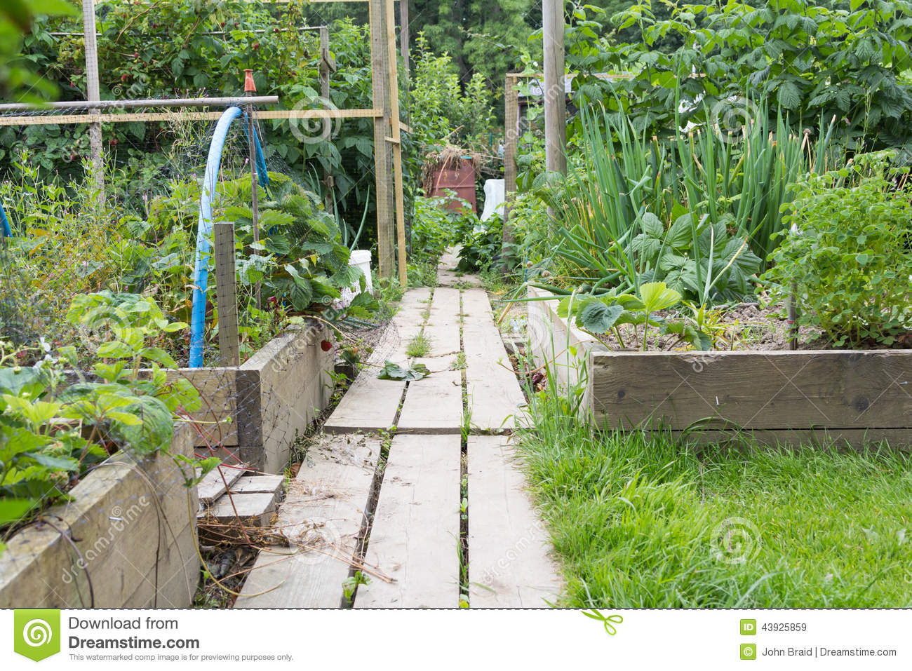 Raised beds with grass paths - Allotment Garden Path Stock Photo Image 43925859