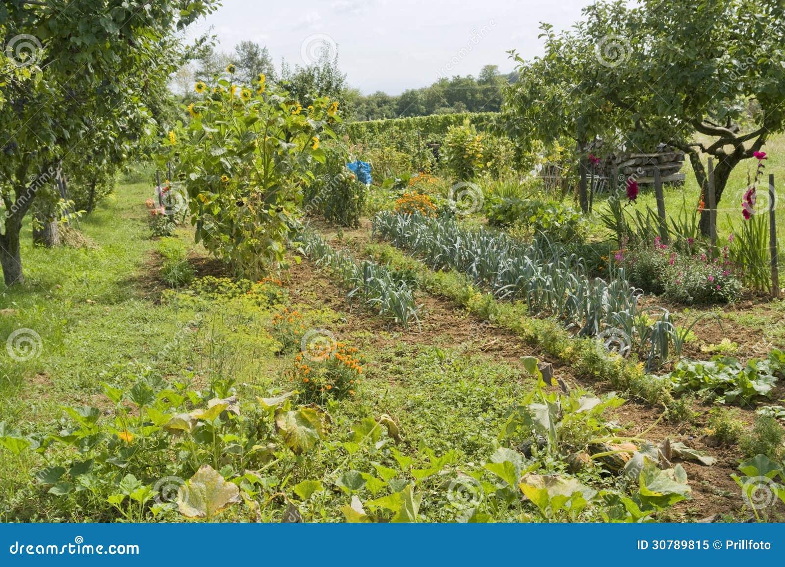 Allotment Garden Royalty Free Stock Photo Image 30789815 - designing a sunny garden