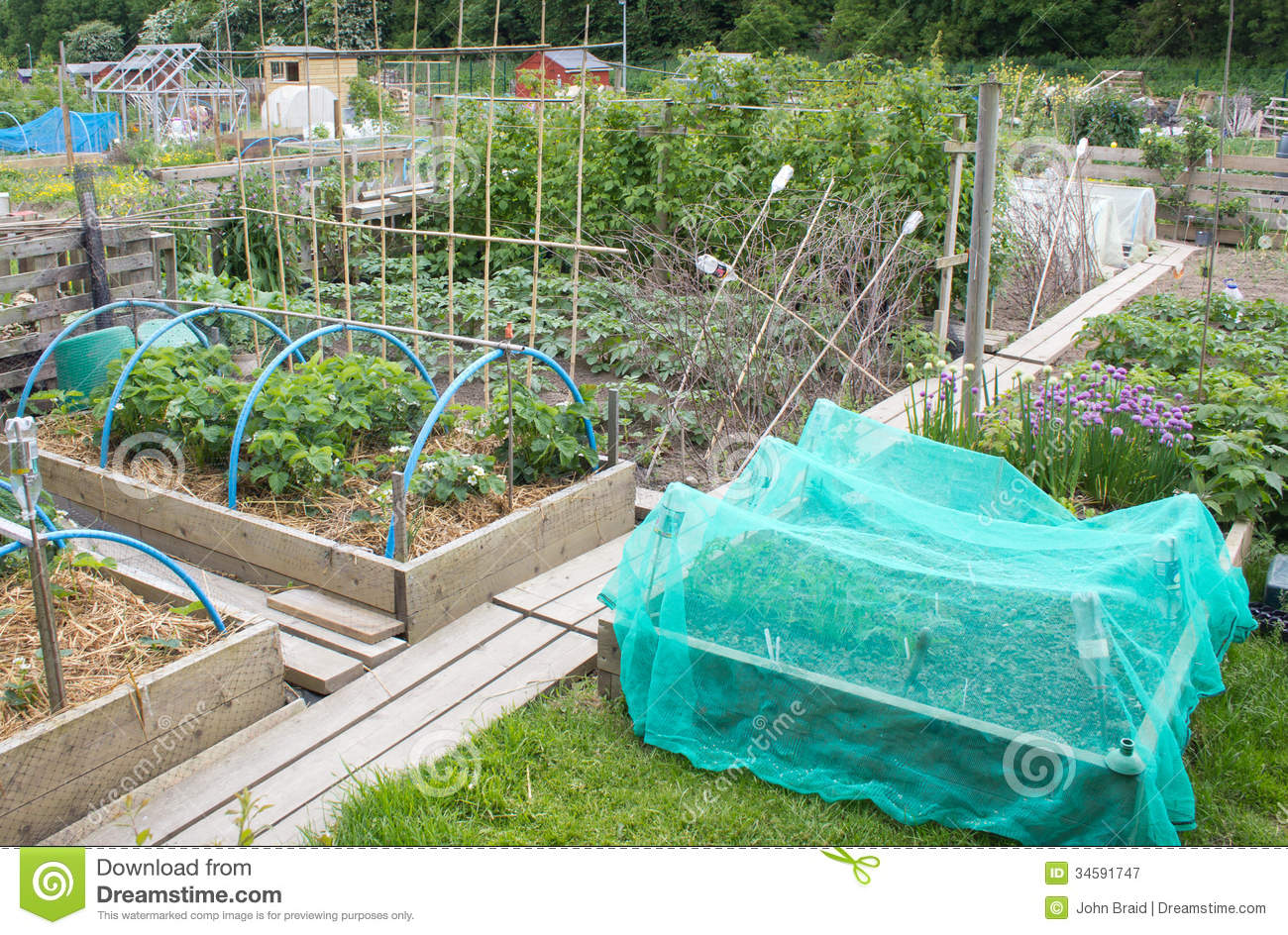 Allotment Vegetable Garden Stock Image Image Of Cultivate 34591747