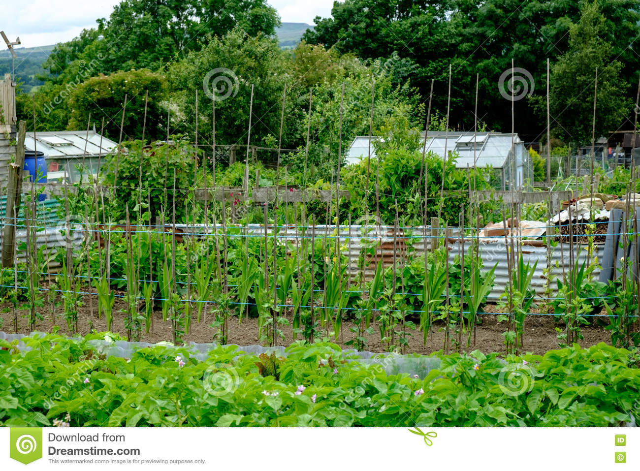 Allotments In UK, Vegetable Gardens Stock Image - Image of ...