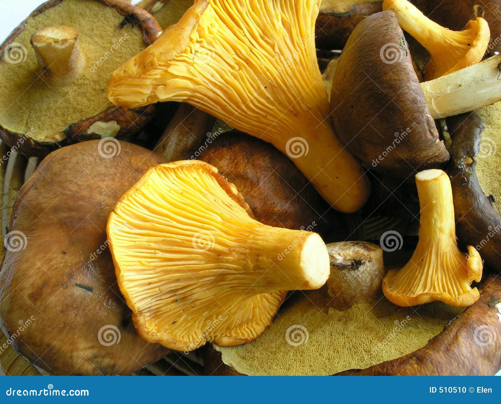 Allsorts-Pilze