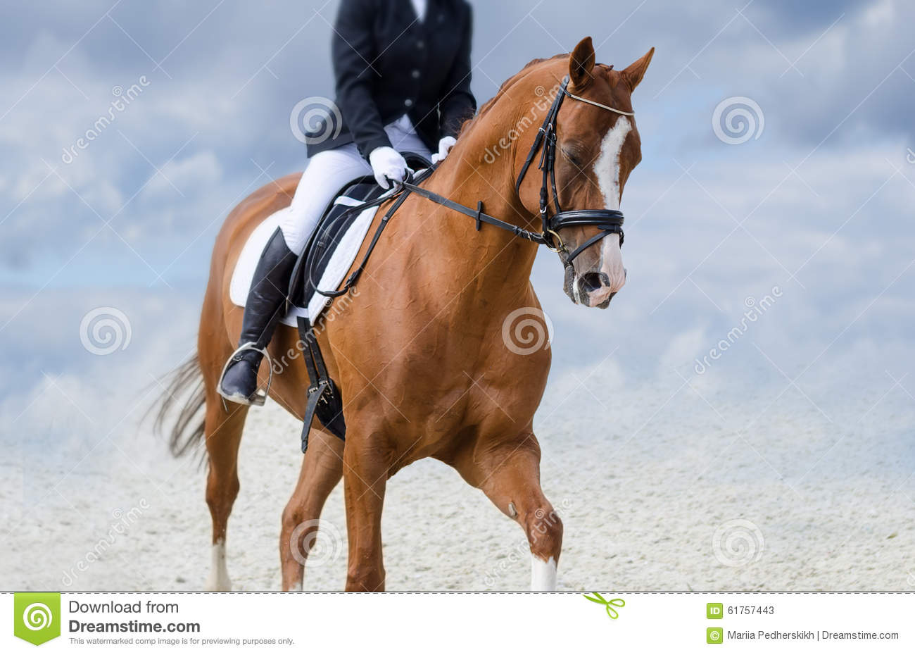 The Allure Of The Red Horse Stock Image Image Of Bright Graceful 61757443
