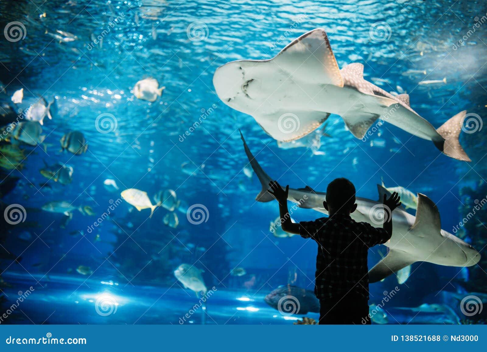 Allvarlig pojke som ser i akvarium med den tropiska fisken