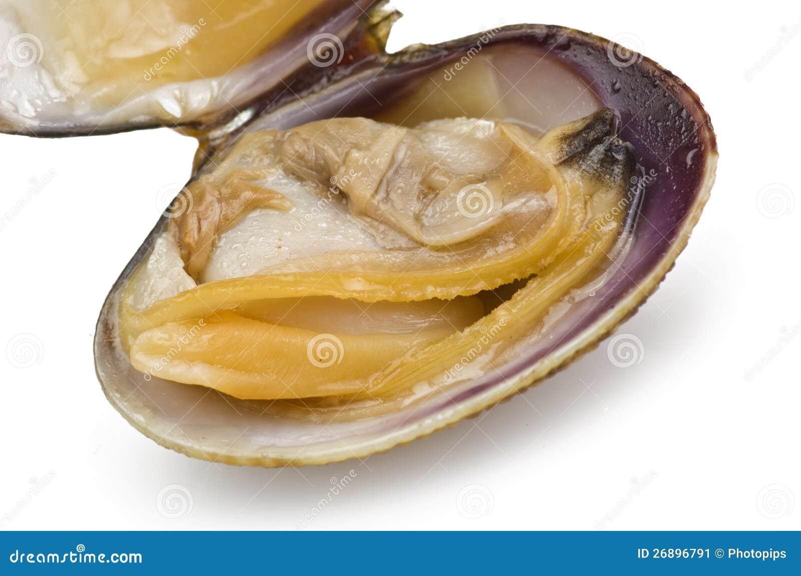 Comida de almeja - 2 2