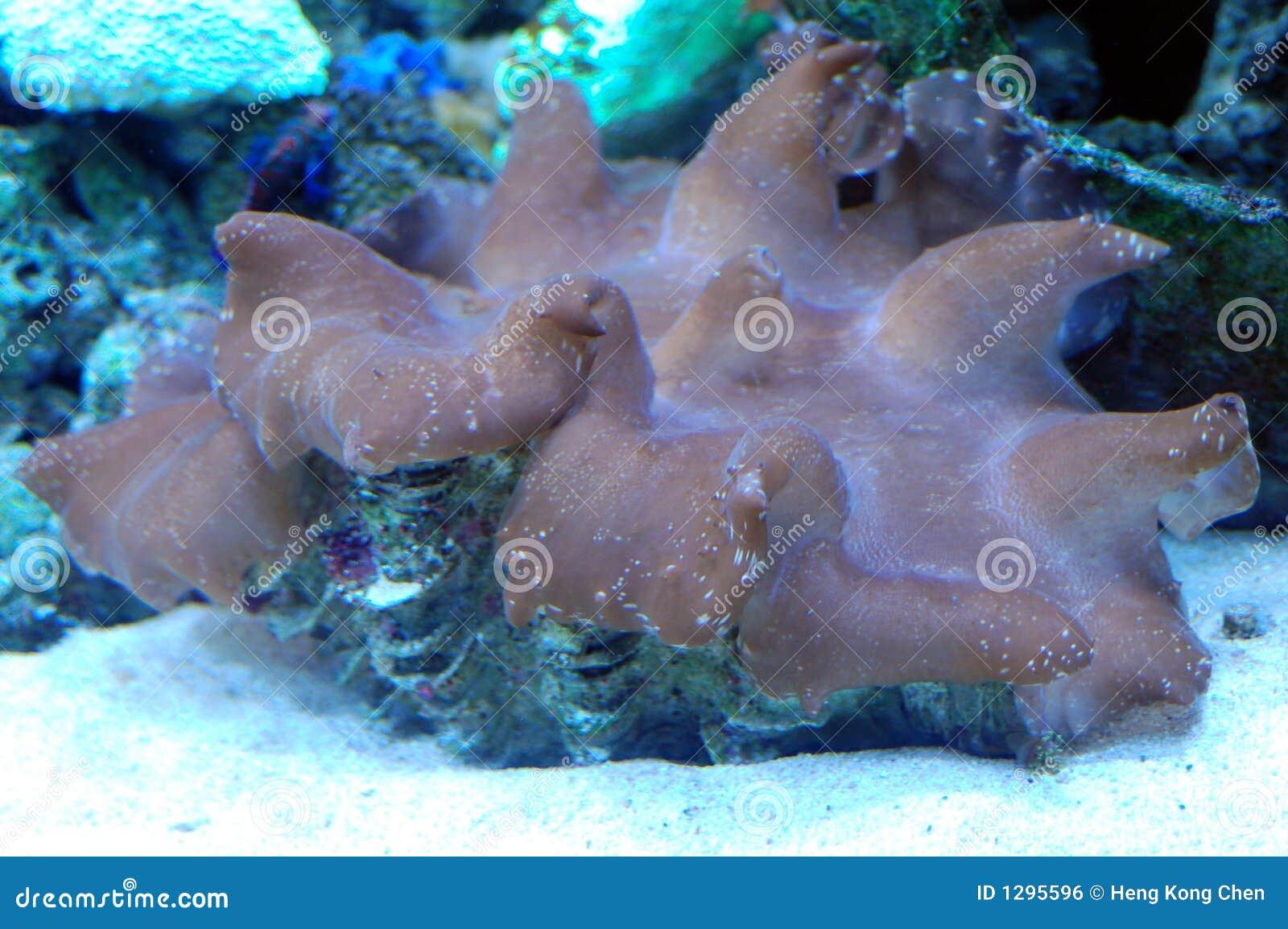 Almeja encontrada bajo el mar