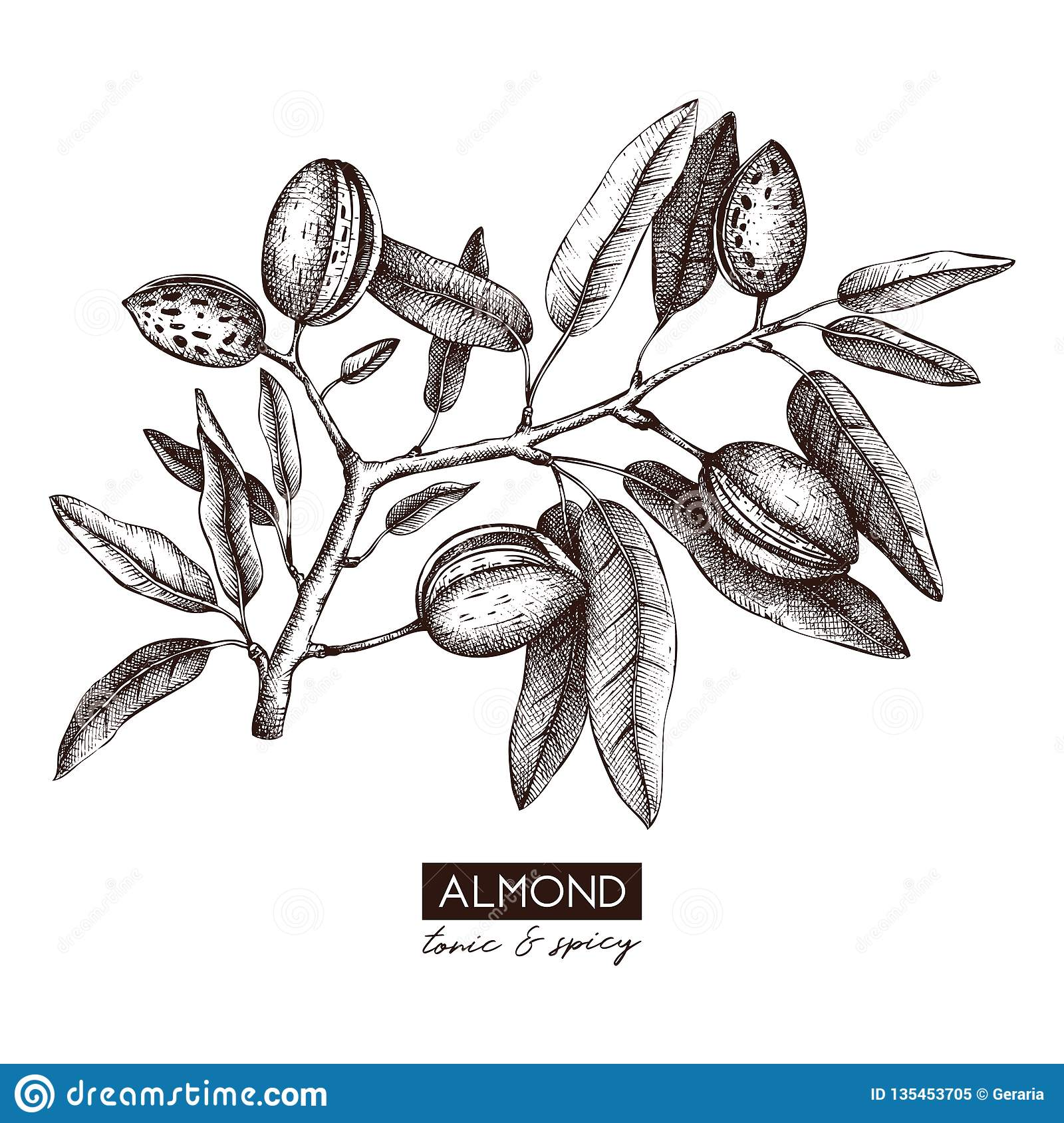 Almond Tree Stock Illustrations 1 741 Almond Tree Stock Illustrations Vectors Clipart Dreamstime
