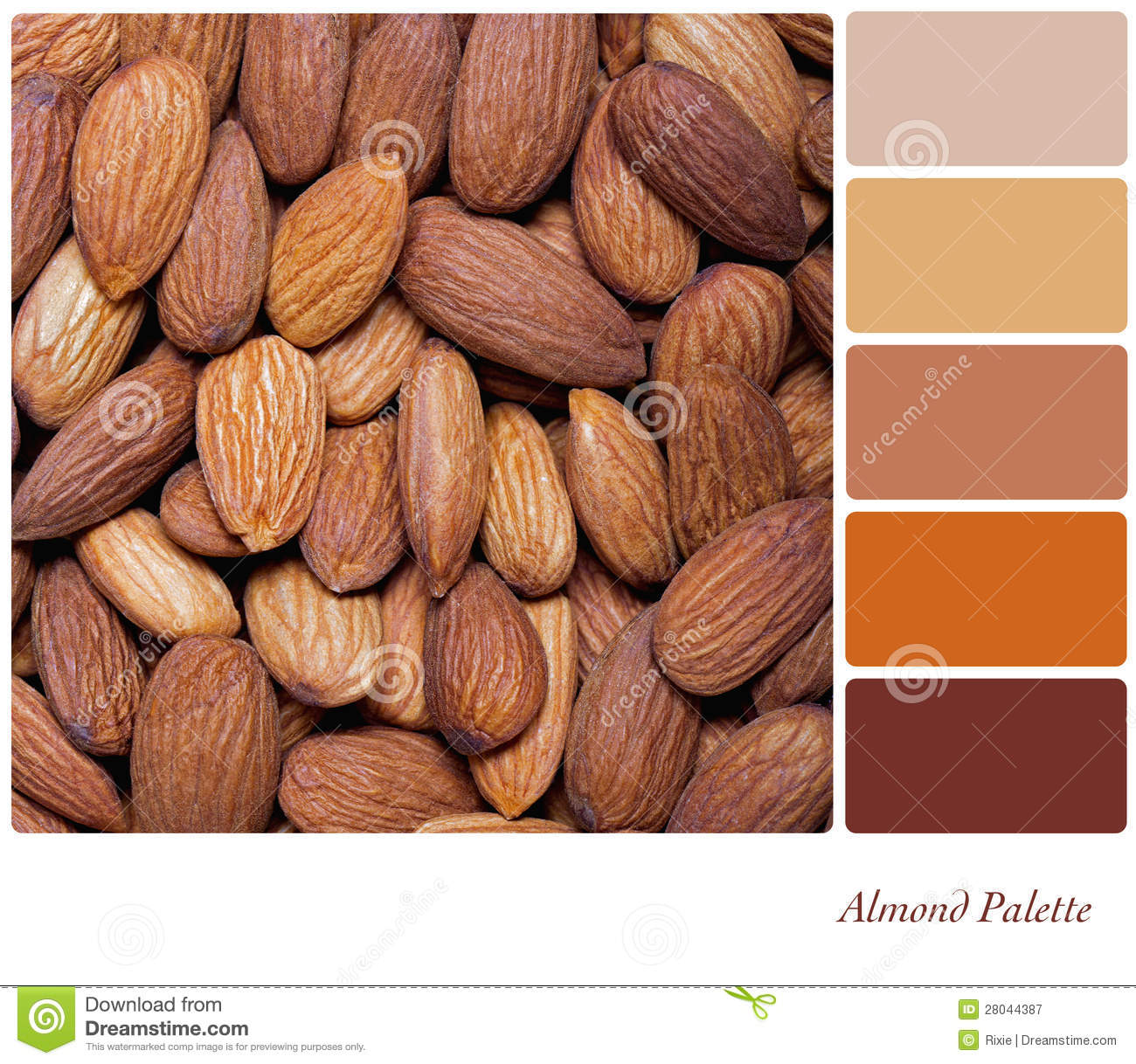 Almond palette royalty free stock photography image for Color almendra pintura