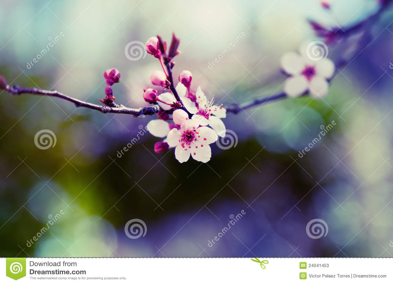 Almond Tree Flower