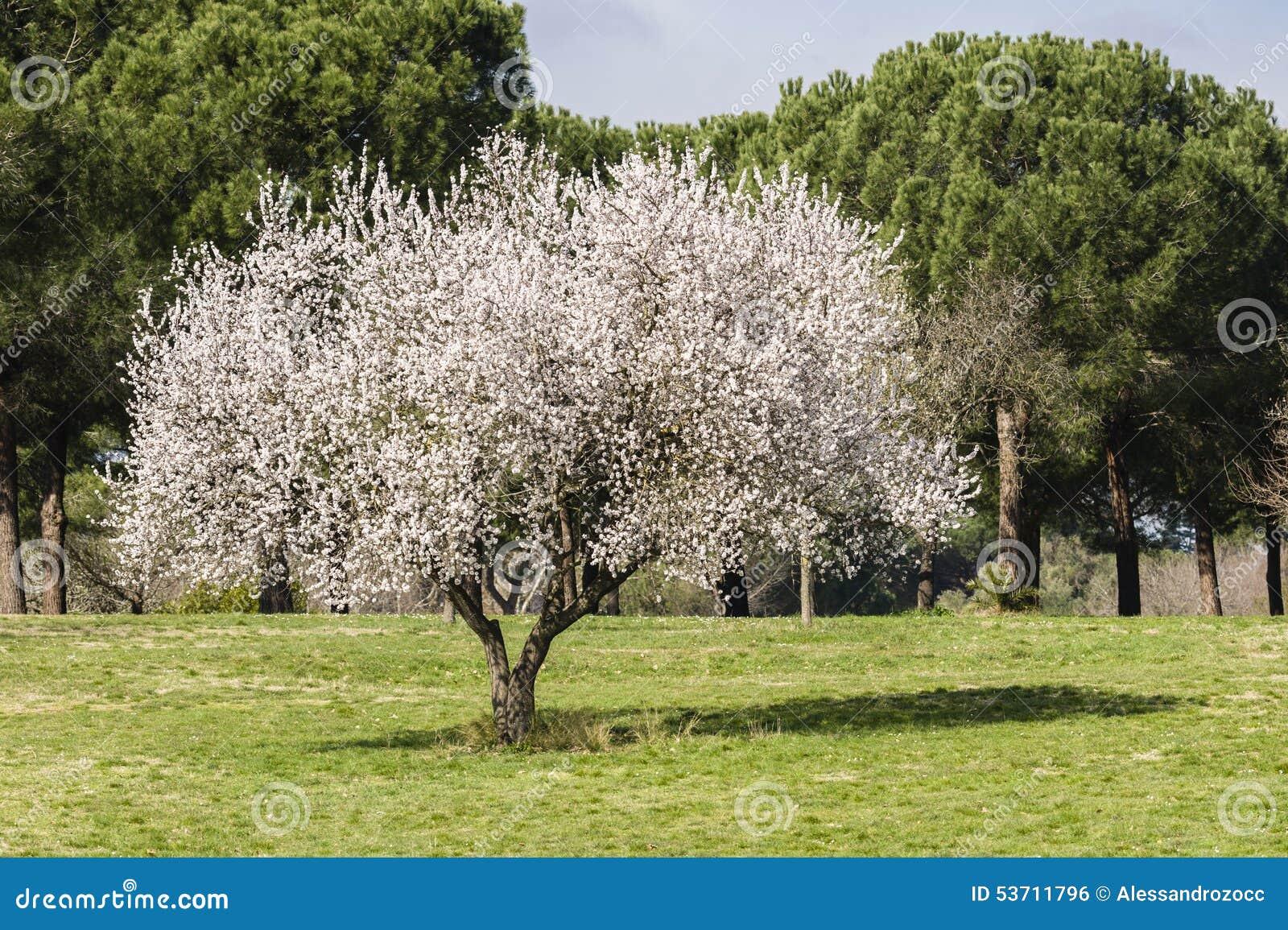 Full Tre blomst