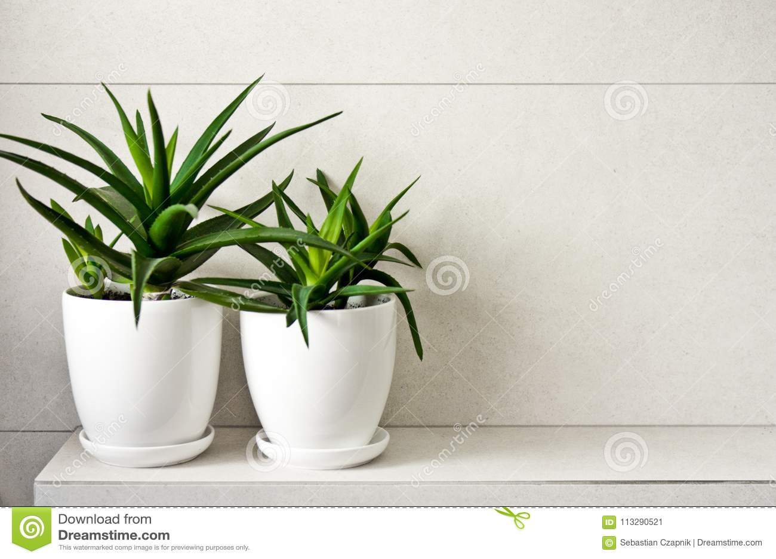 Yucca Dans Salle De Bain ~ alo s m dical vera d herbe dans des pots sur l tag re de salle de