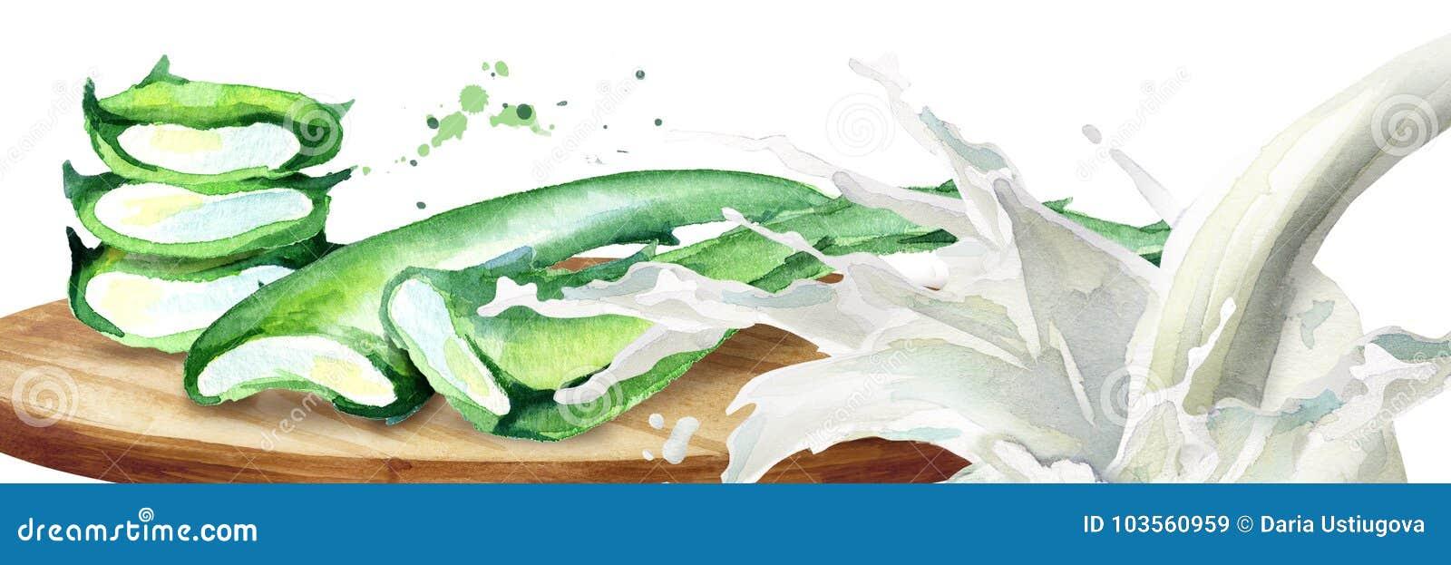 Aloés orgânico vera e respingo do iogurte Ilustração tirada mão da aquarela