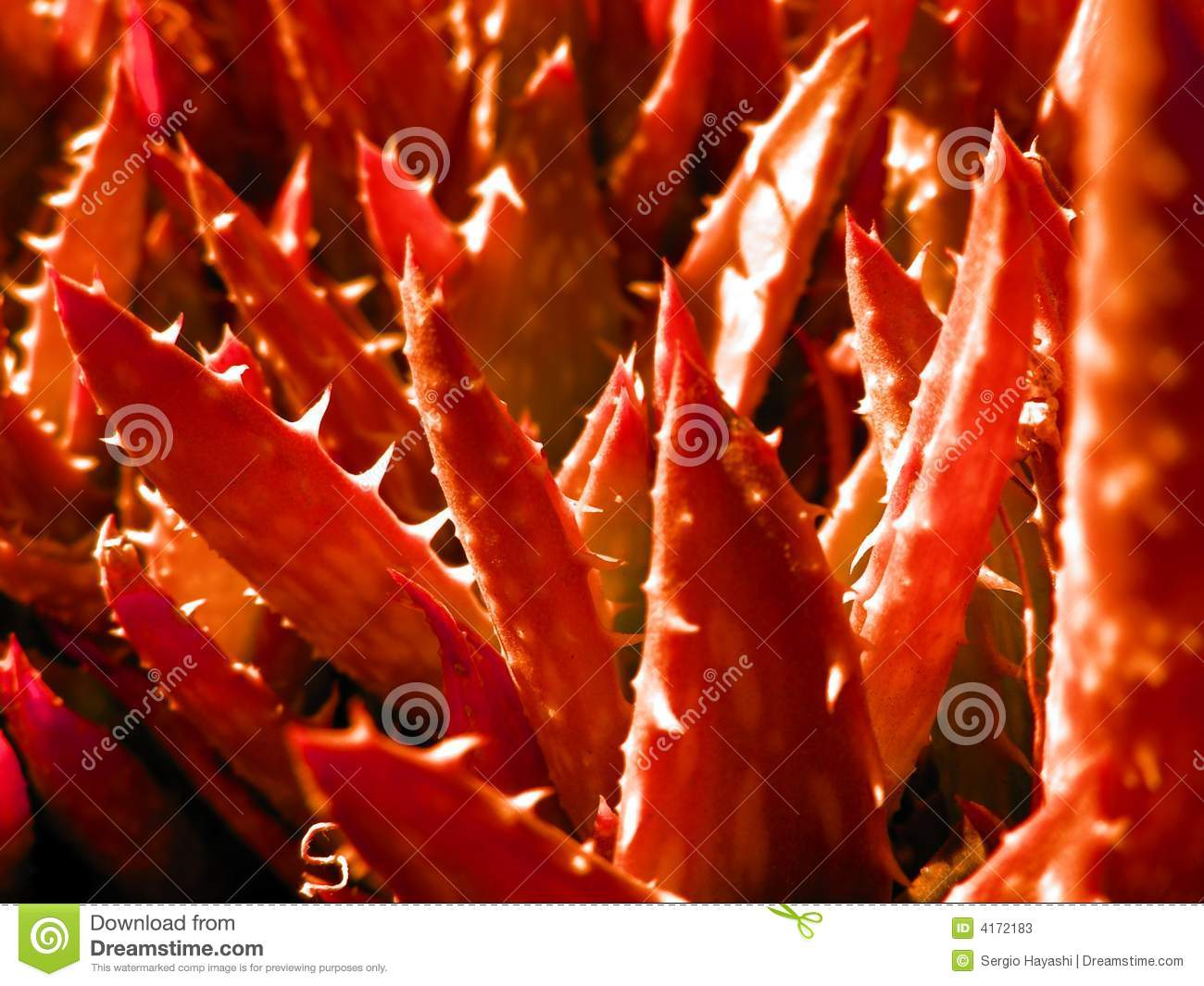 Aloe forrest in red