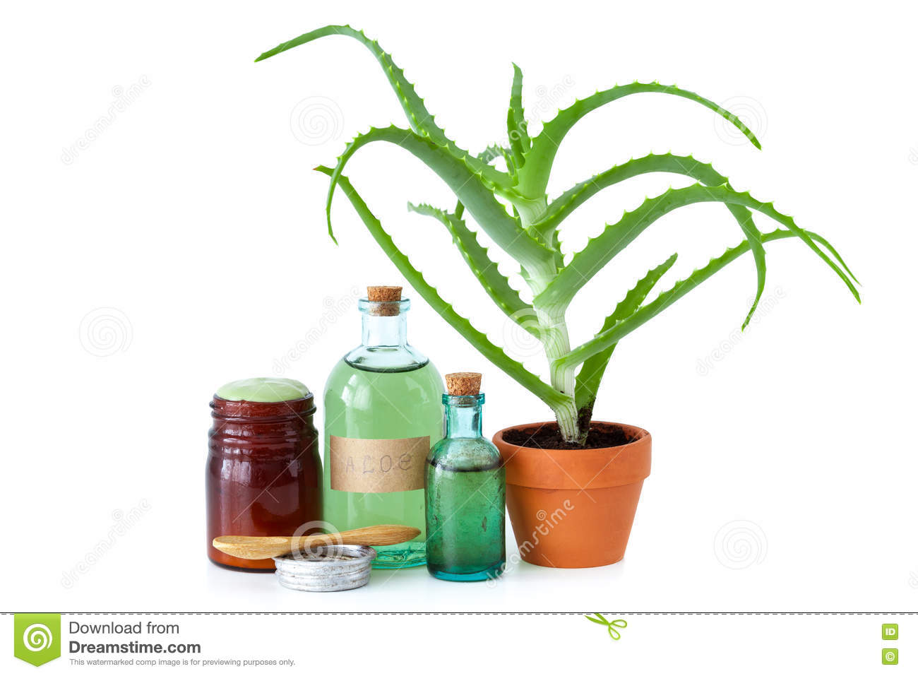 Aloe plant, aloe vera essence, cream and other products on white.