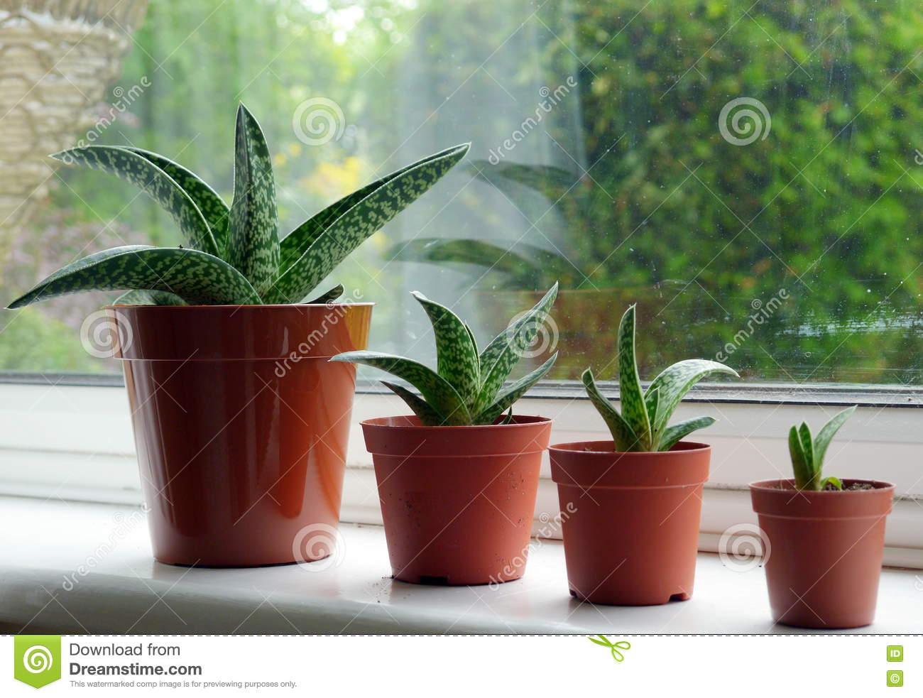 Image result for ALOE VERA garden windowsill