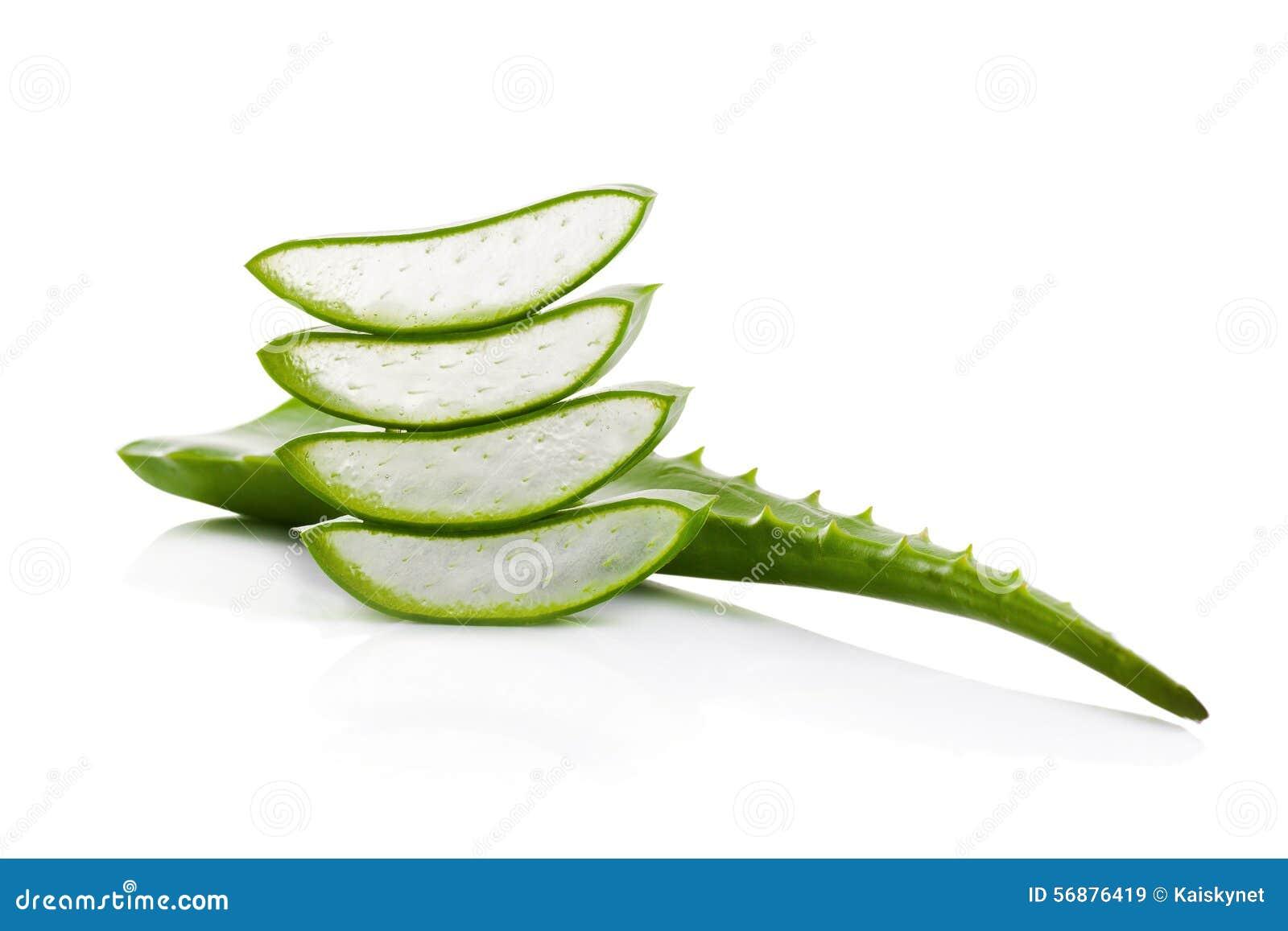 Aloe vera isolata su priorità bassa bianca