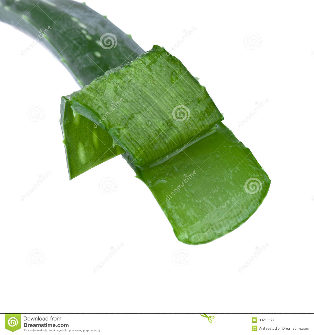 how to cut and replant aloe vera plant
